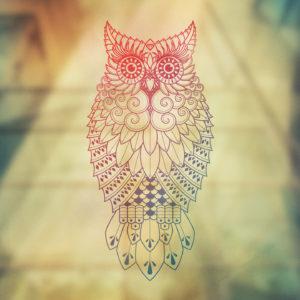 Snowy Owl Wallpaper HD