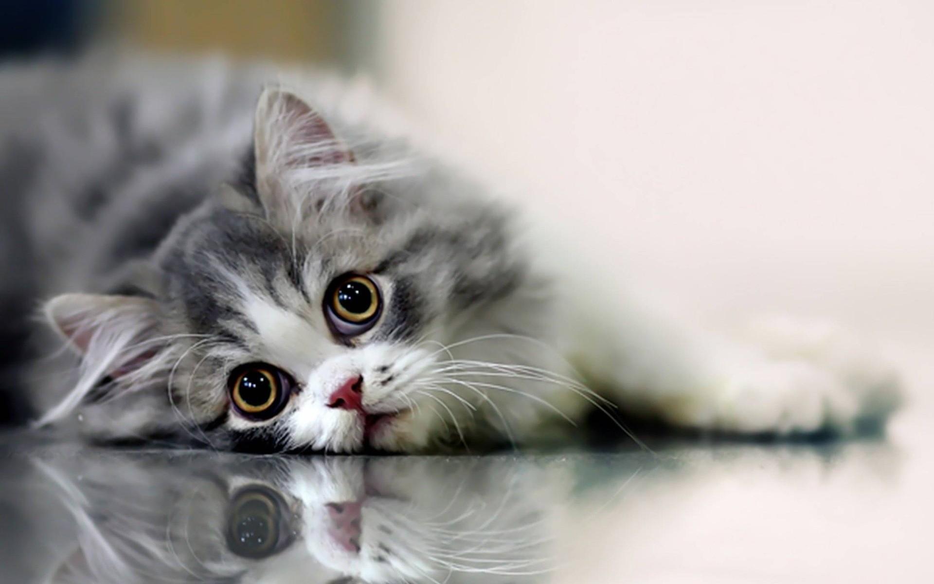 Beautiful Cat Full HD Wallpapers