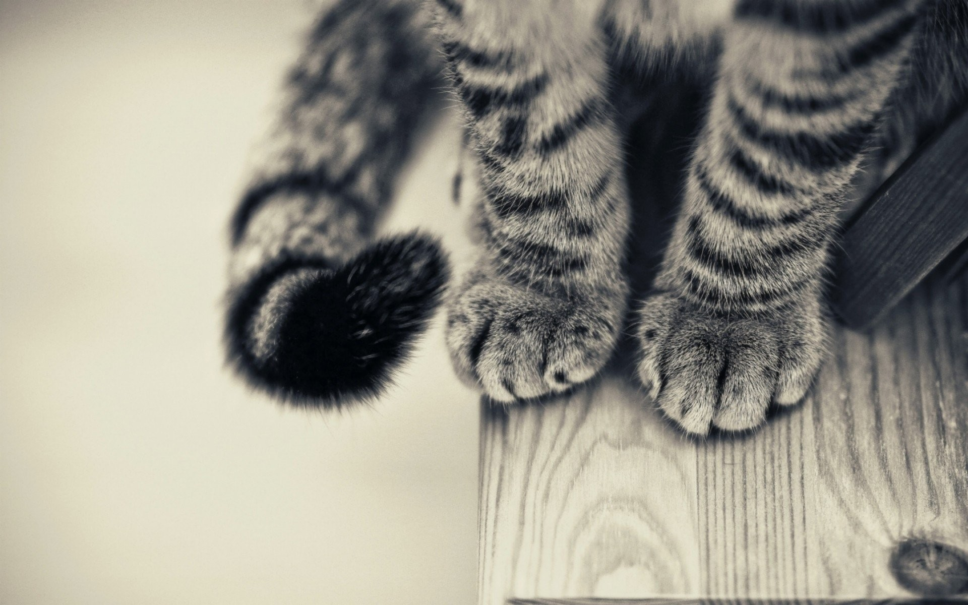 HD Wallpaper   Background ID:374329. Animal Cat