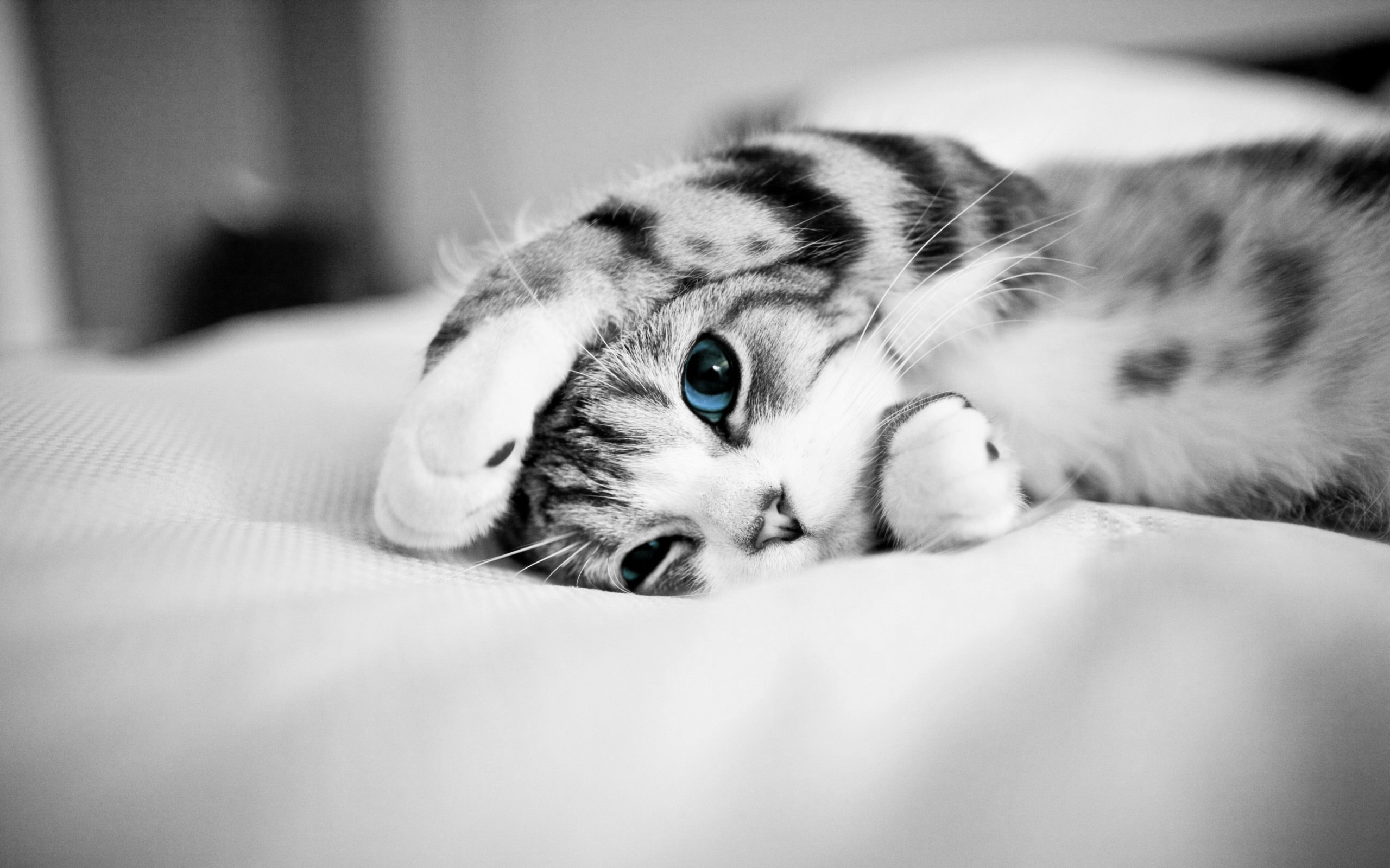 Free-download-Lovely-Cat-Wallpaper