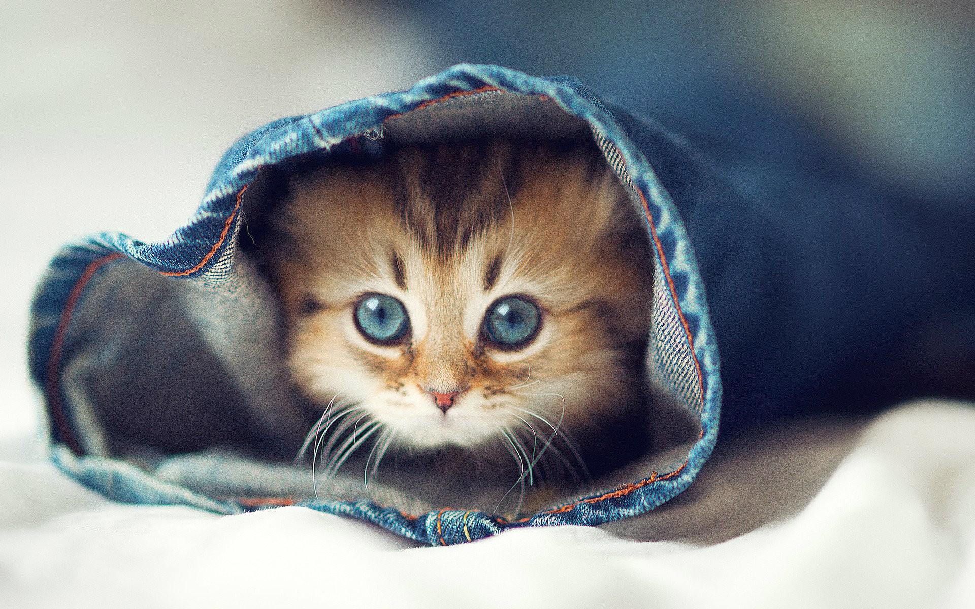 Most Beautiful Cute Cat Wallpaper Beautiful Image