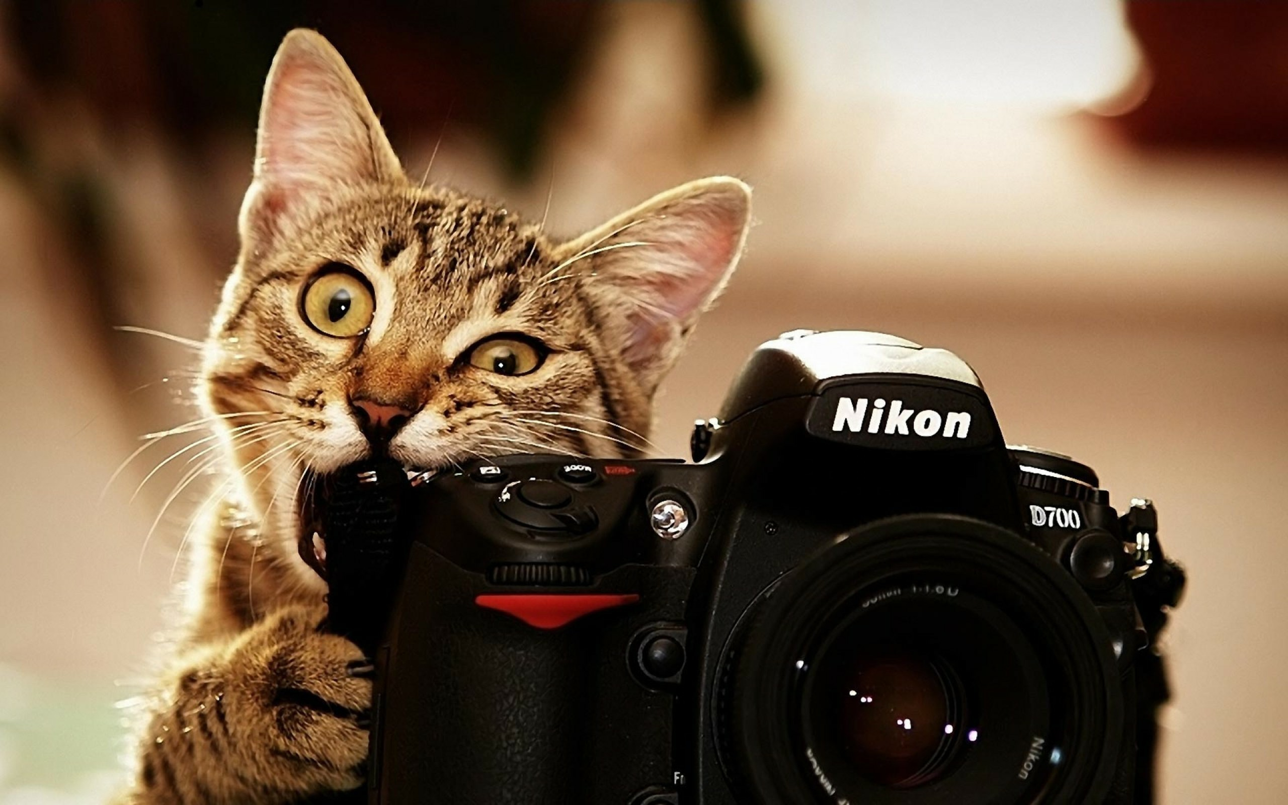 wallpaper.wiki-Free-hd-cat-wallpapers -best-photography-download-PIC-WPD0011961