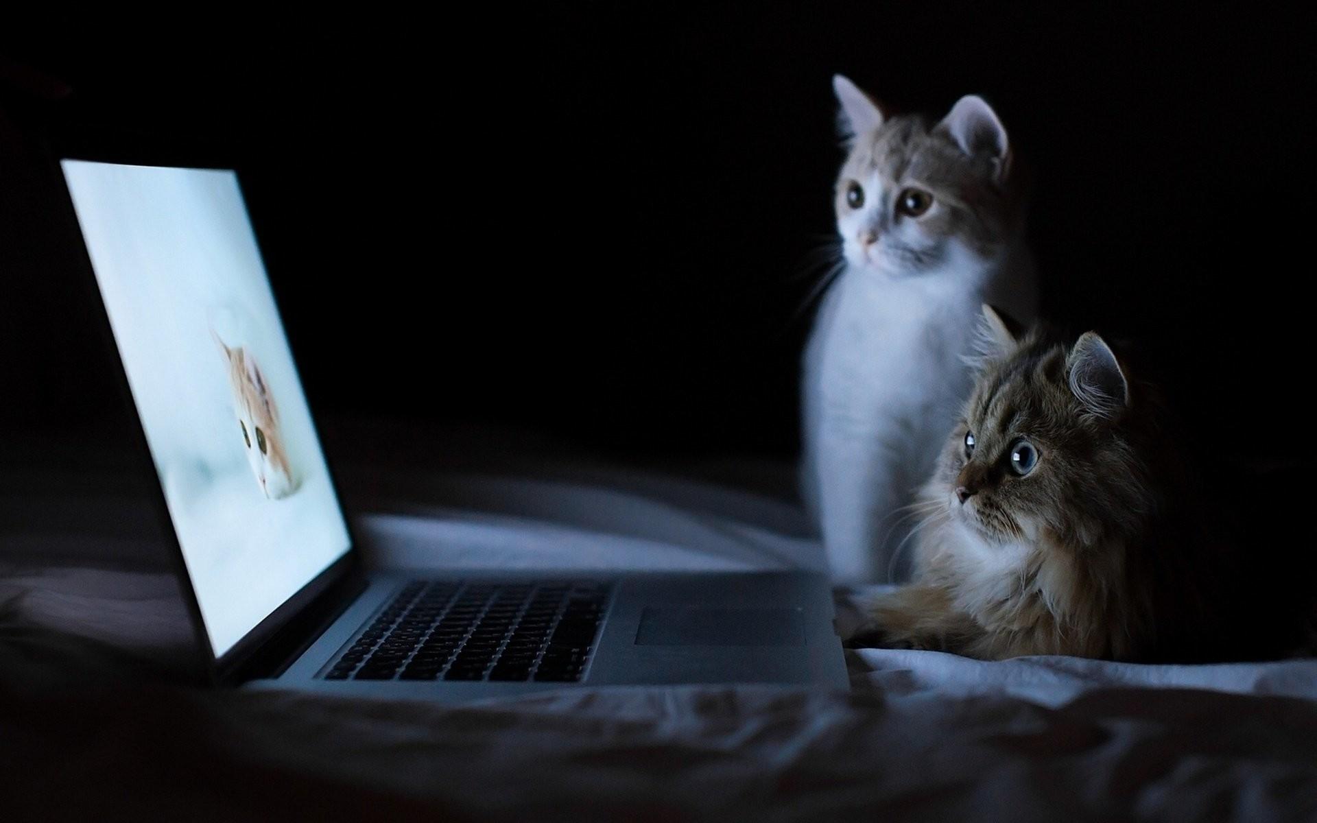 HD Wallpaper   Background ID:323913. Animal Cat