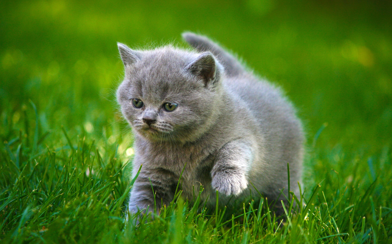 HD Wallpaper   Background ID:408941. Animal Cat