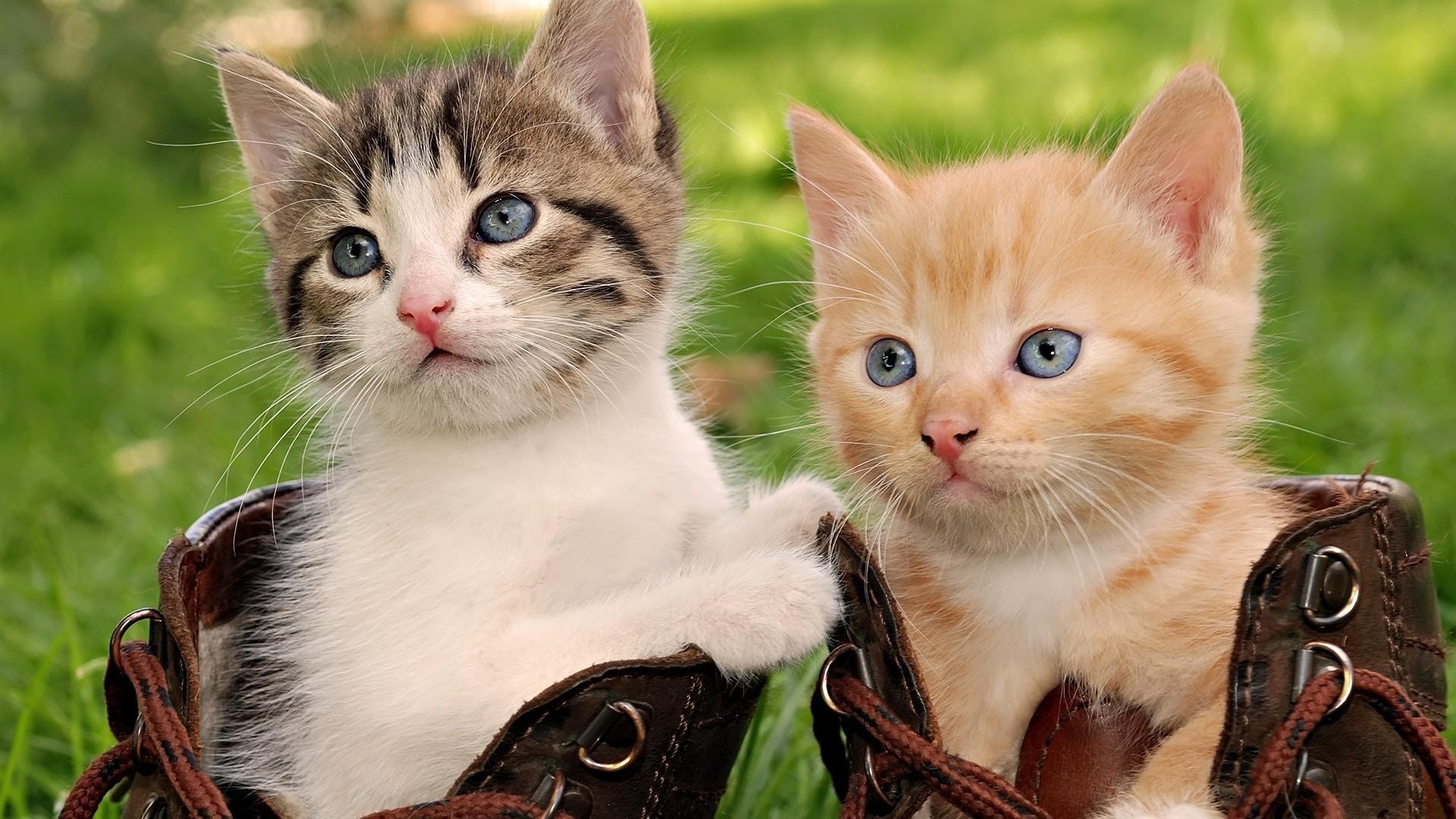 HD Cats Wallpaper