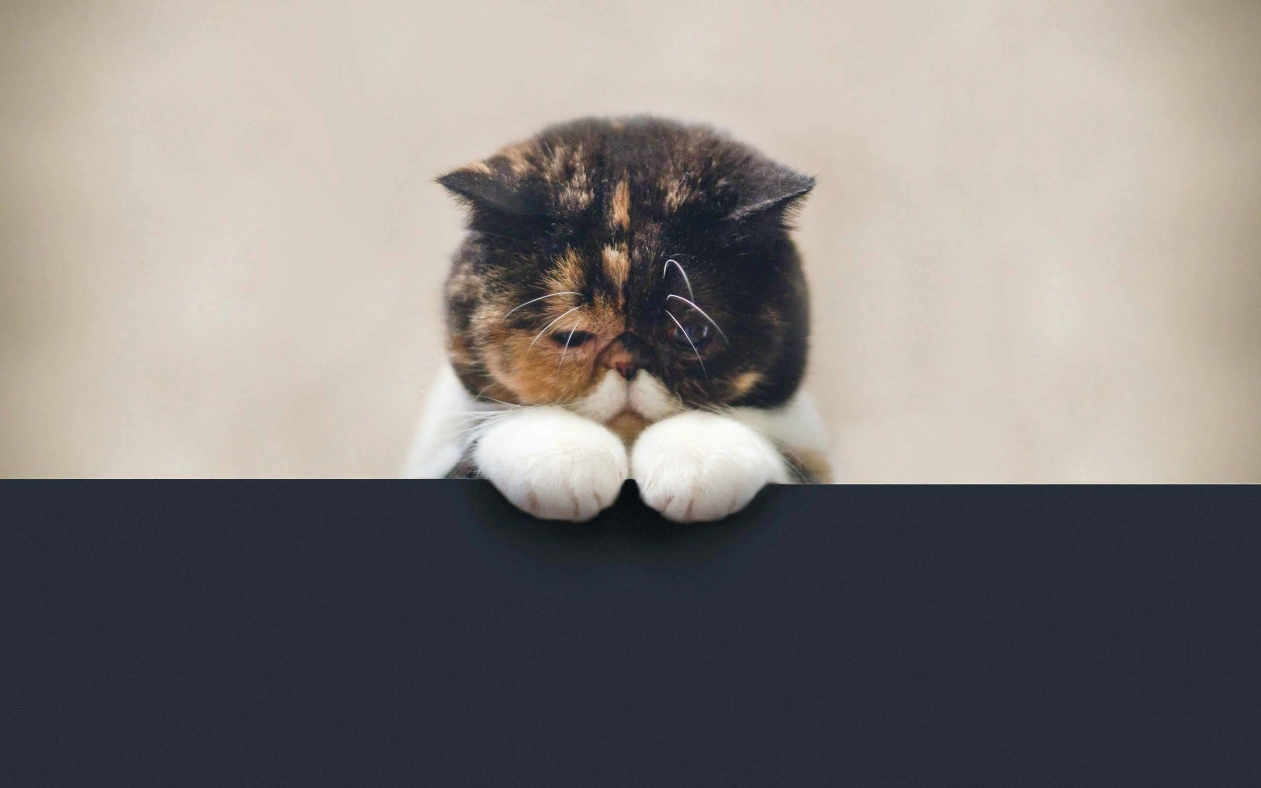 Cute Little Sad Cat Full Hd Wallpaper