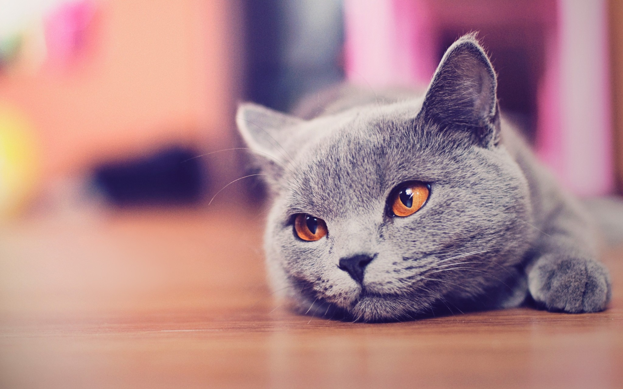 hd cat wallpapers iphone