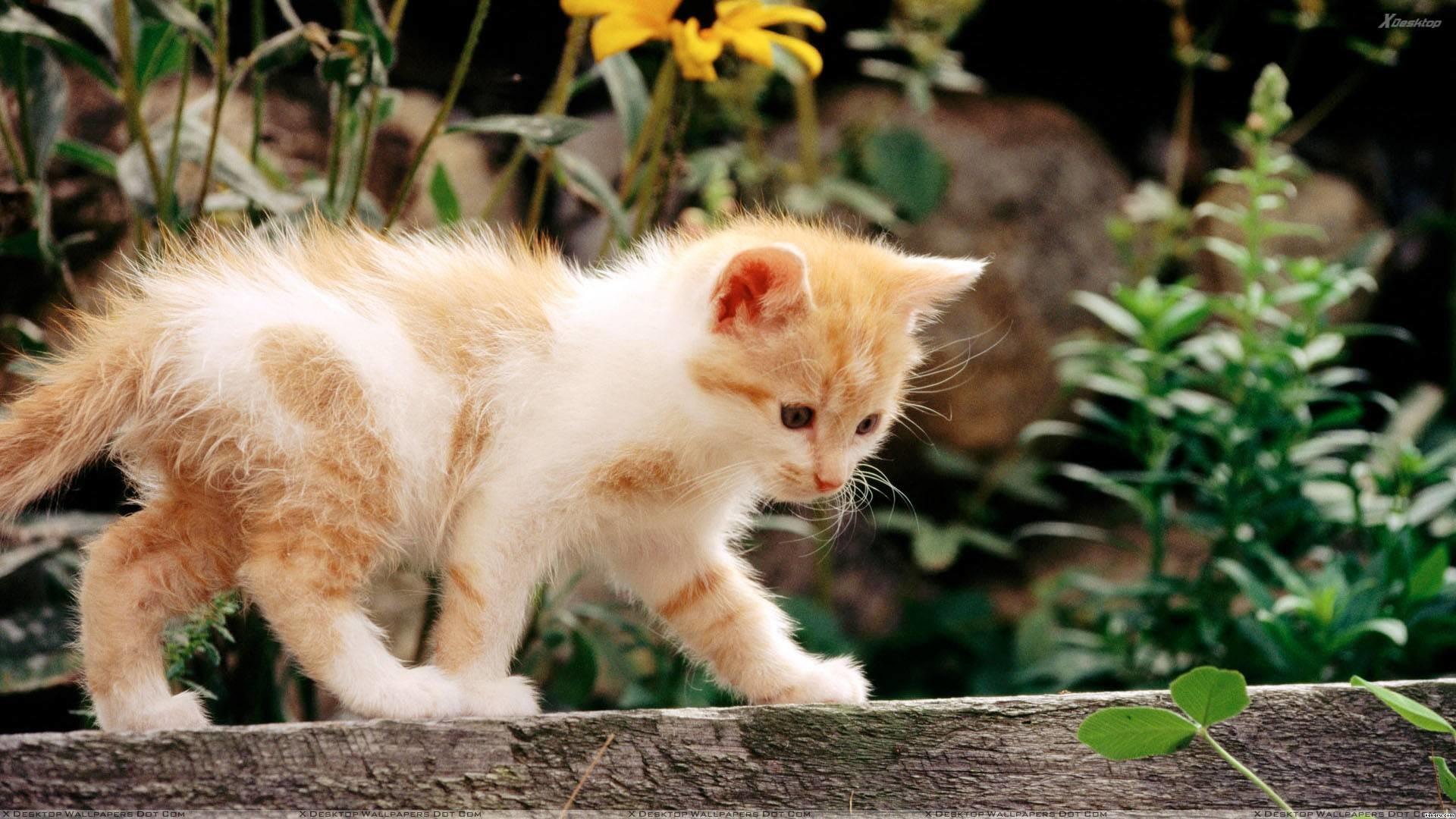 46268-cats-adorable-cute-cat-hd-wallpaper-1080-