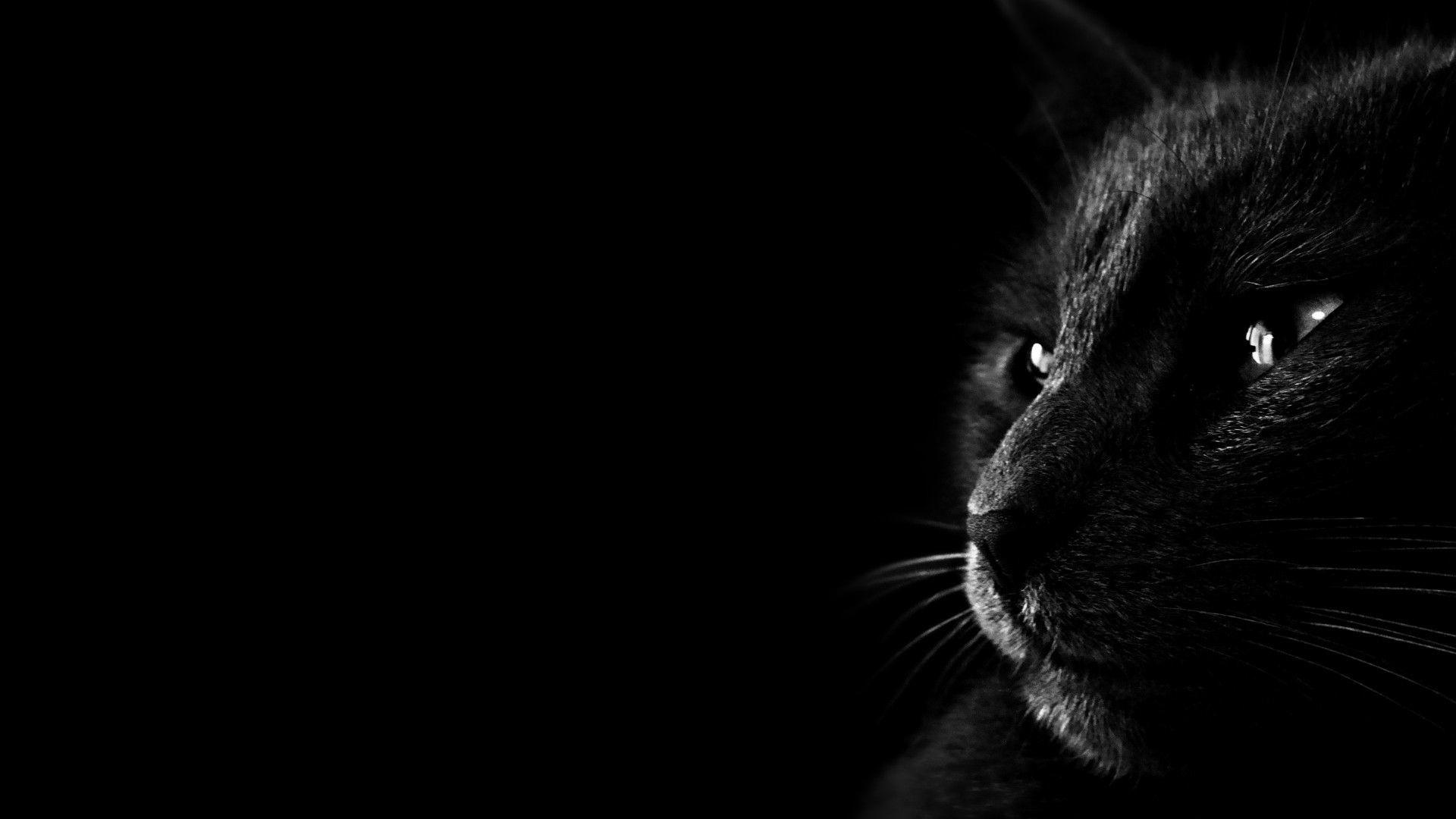 nice black cat photo hd
