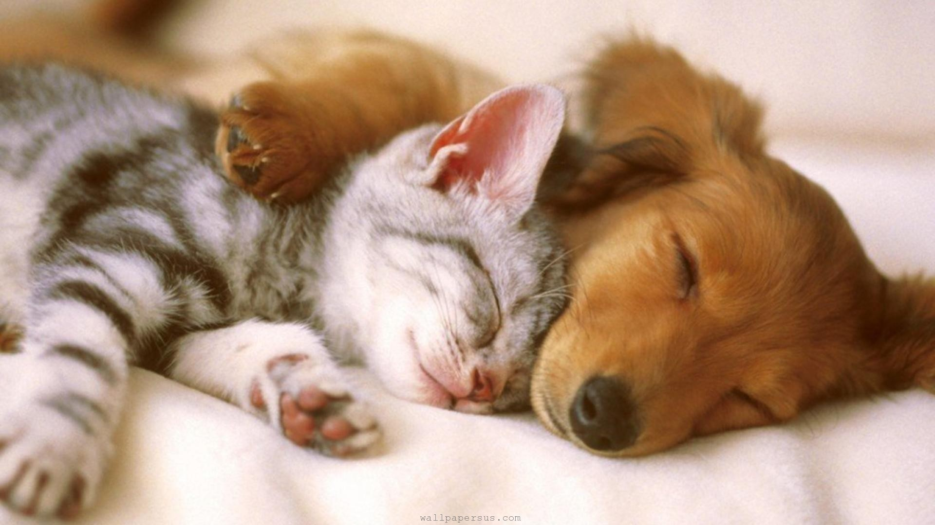 Hilarious Cats and Dogs – Cuteness Overflow