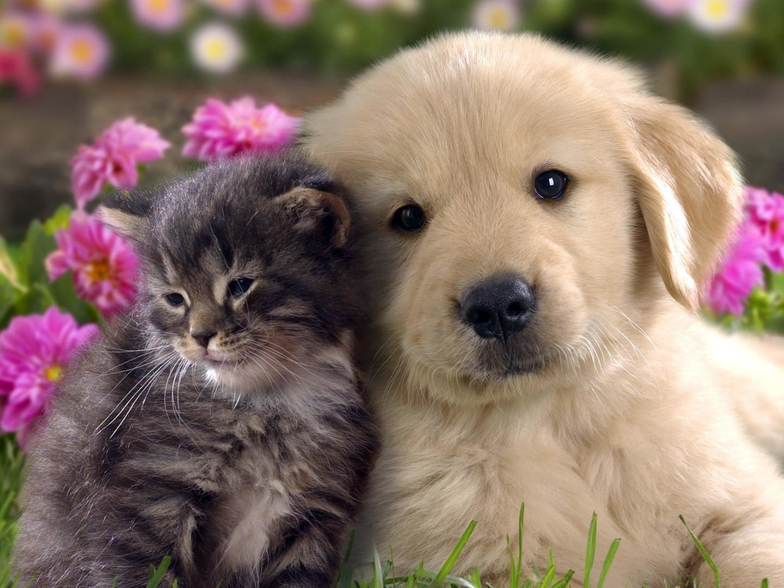 cat and dog funny images download