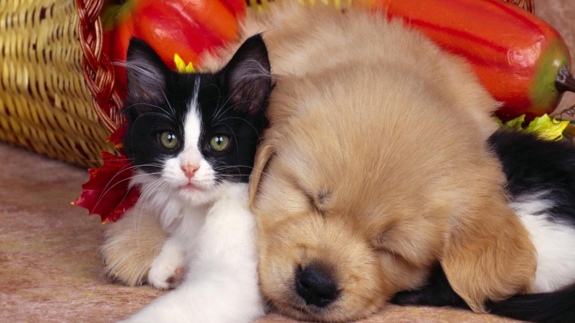 Cute Pets – Little Baby Kitty Kitten Puppy Pooch .