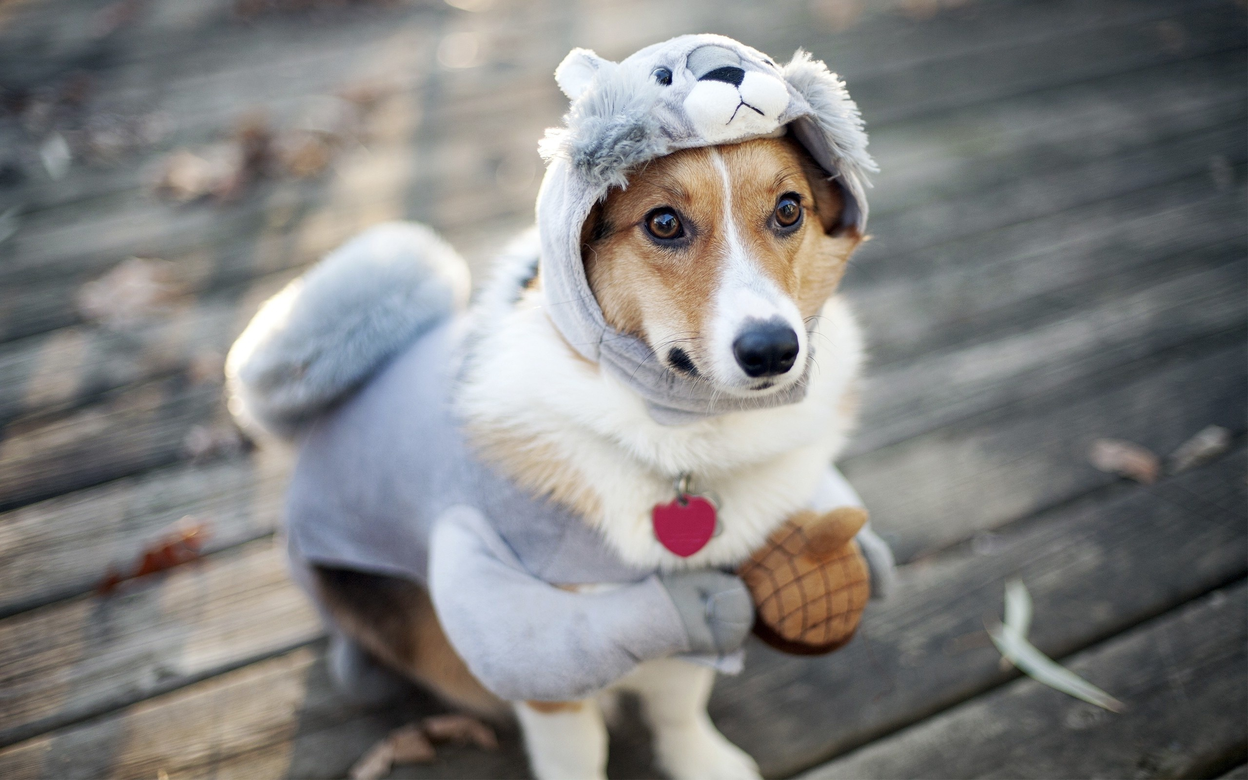 funny dog and cat images download
