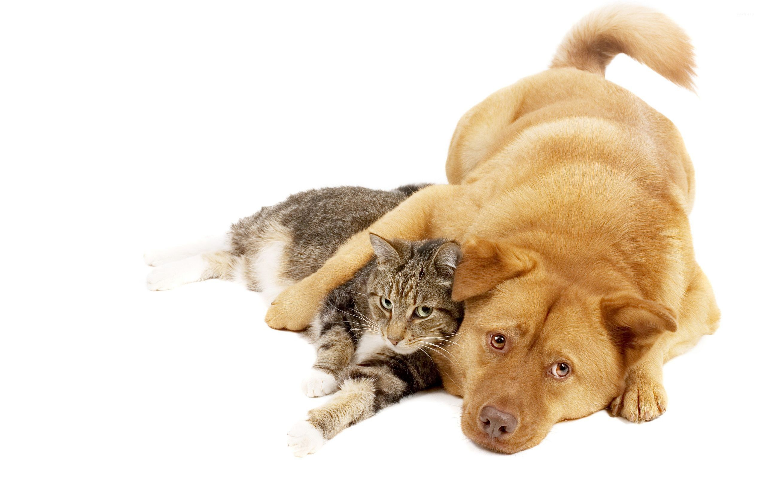 CAT AND DOG WALLPAPER Images | Crazy Gallery