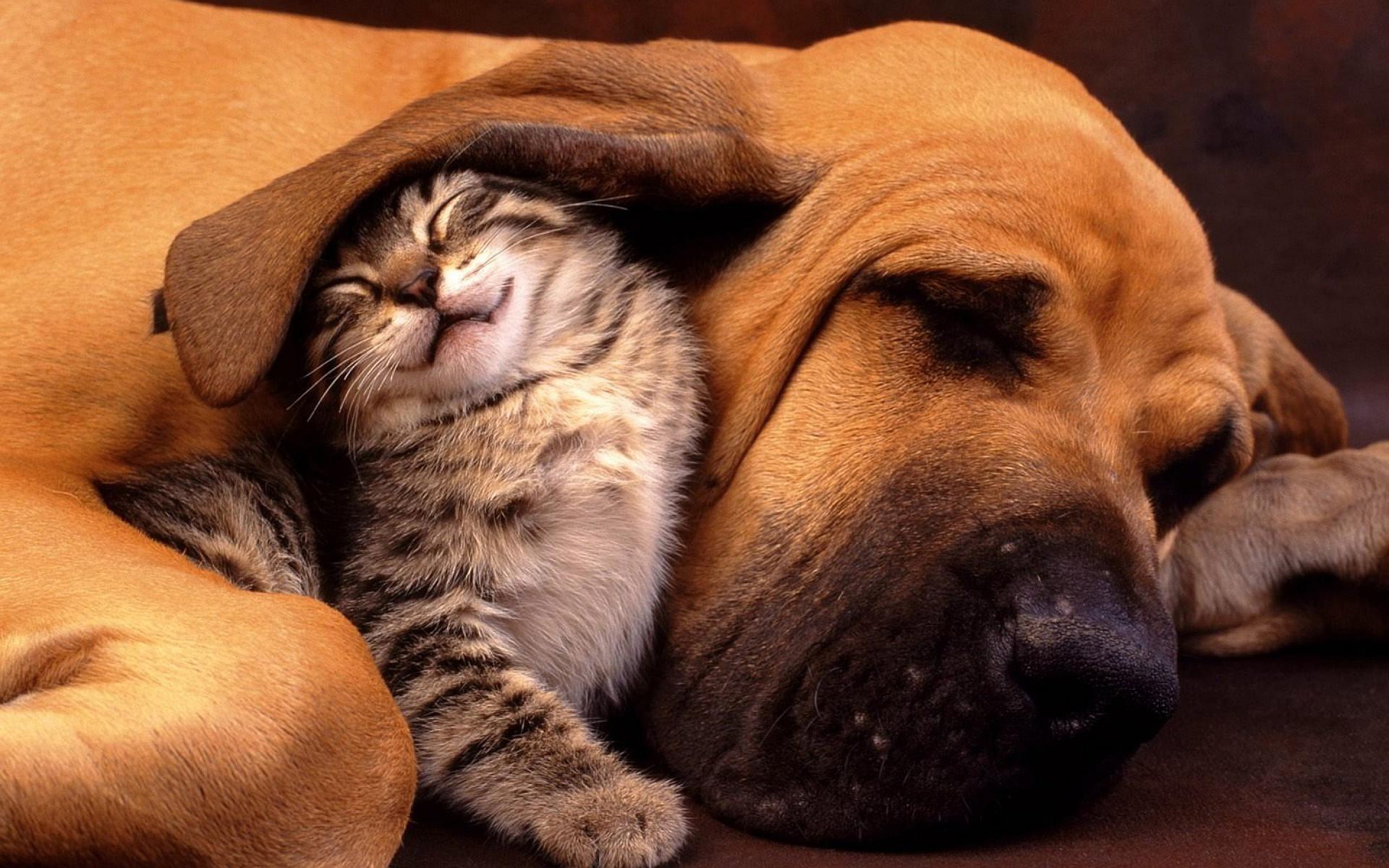 Cats dog cuddle