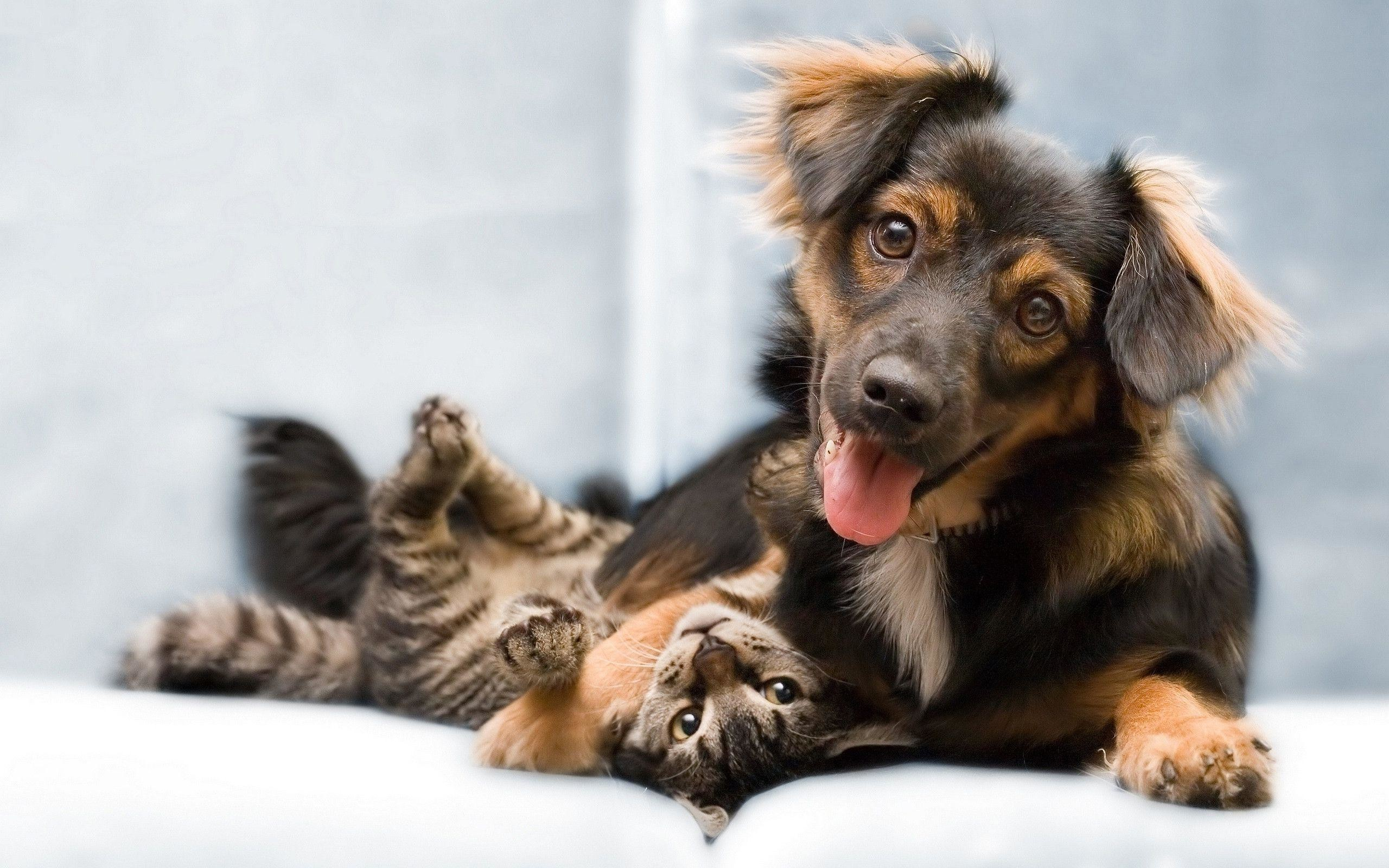 dog and cat wallpapers – wallpaper cave