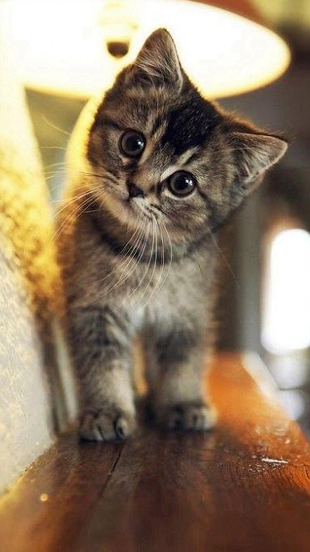 Cute Stare At Cat Animal #iPhone #6 #plus #wallpaper