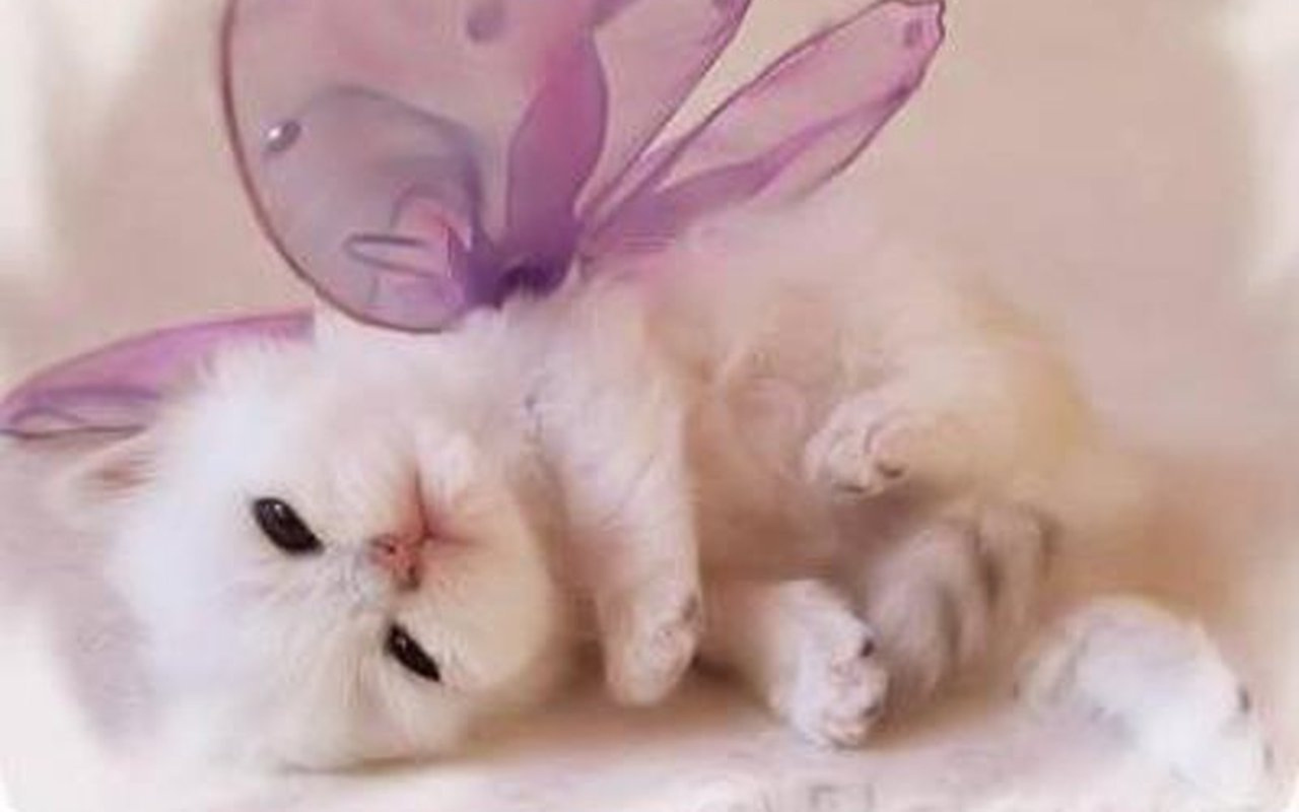 Cute Cats and Dogs 41 HD Images Wallpapers Wallpaper