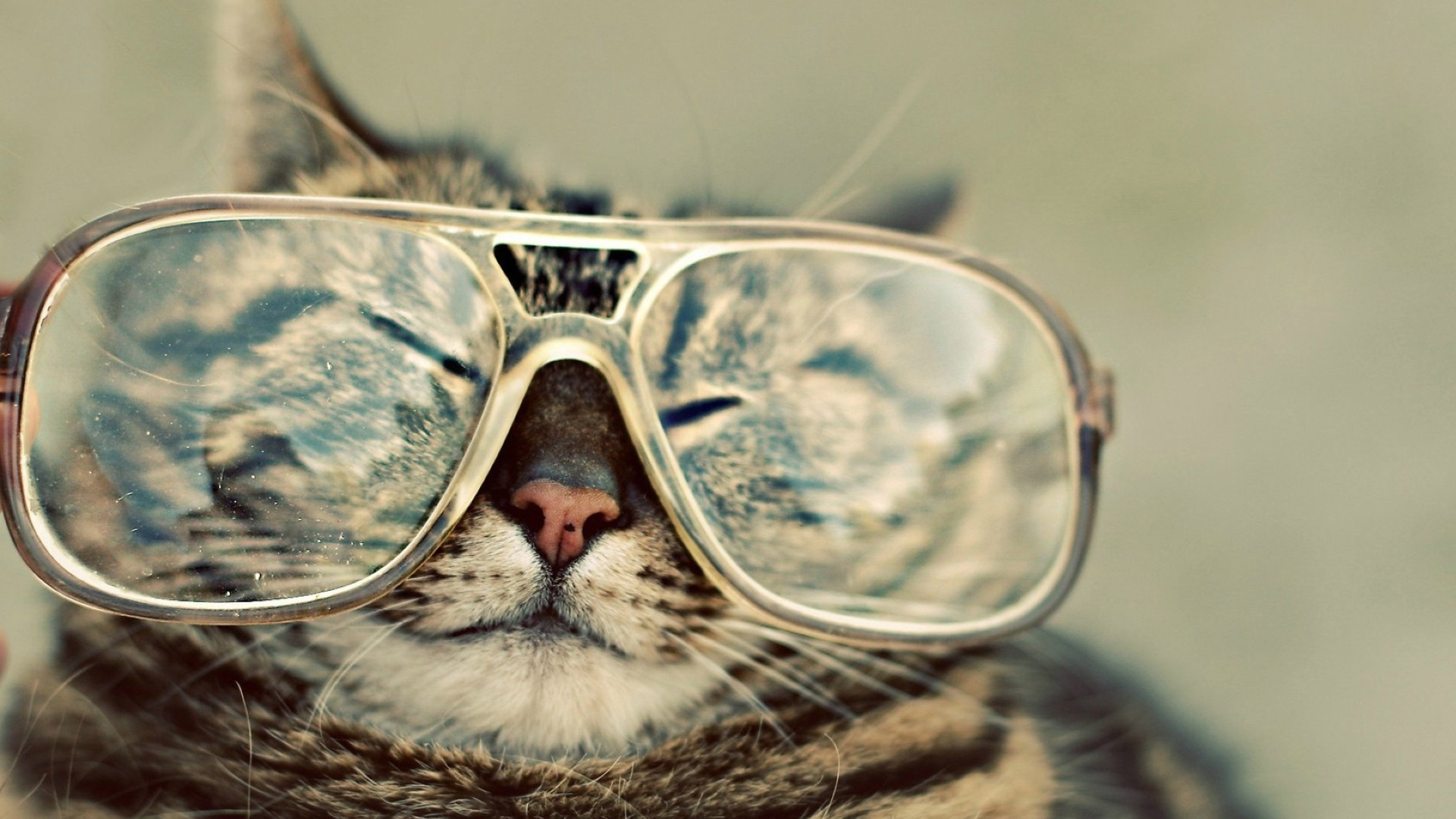 Funny Cat wallpapers and stock photos
