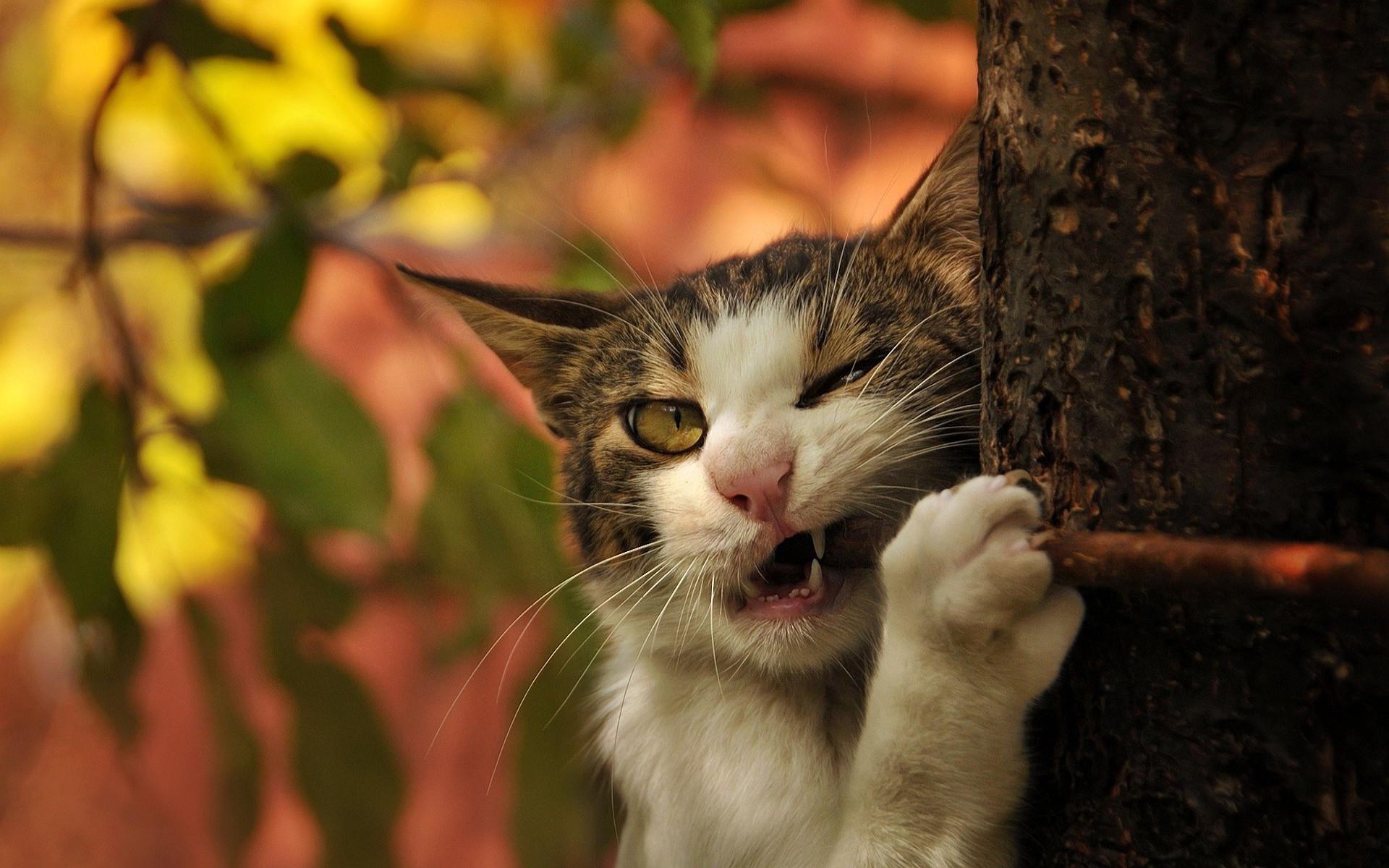 Funny cat bite