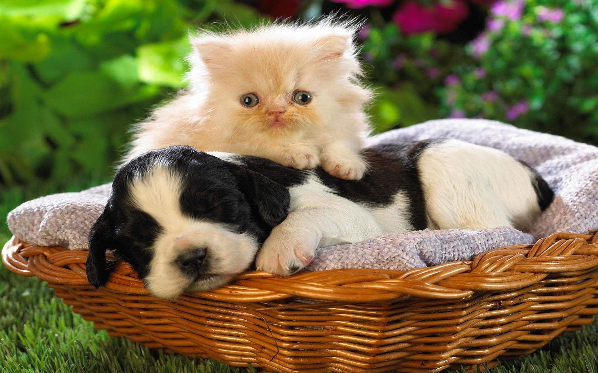 … animal cat with dog wallpaper free; funny …