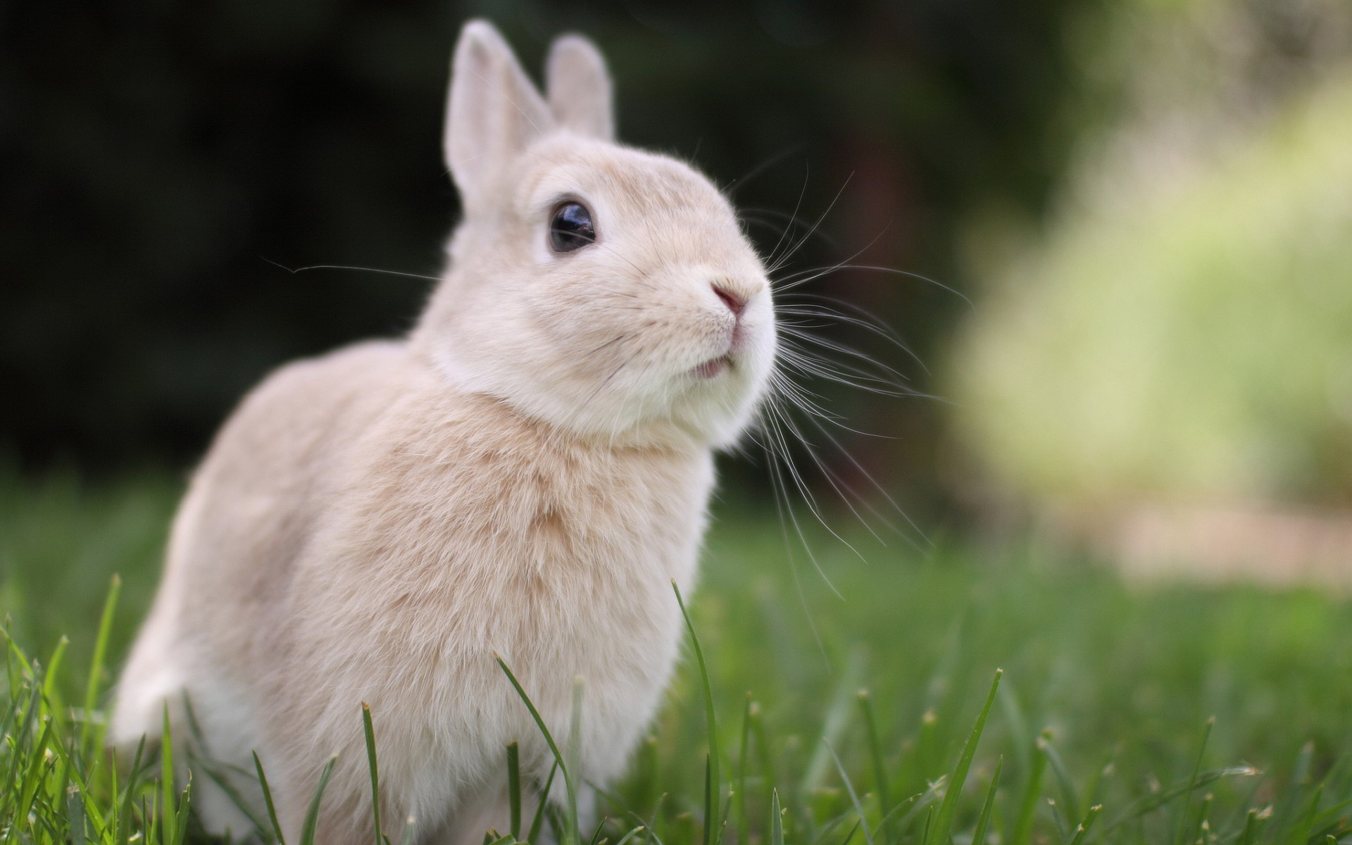 Animals Wallpaper: Cute Bunny Wallpapers Free with HD Desktop