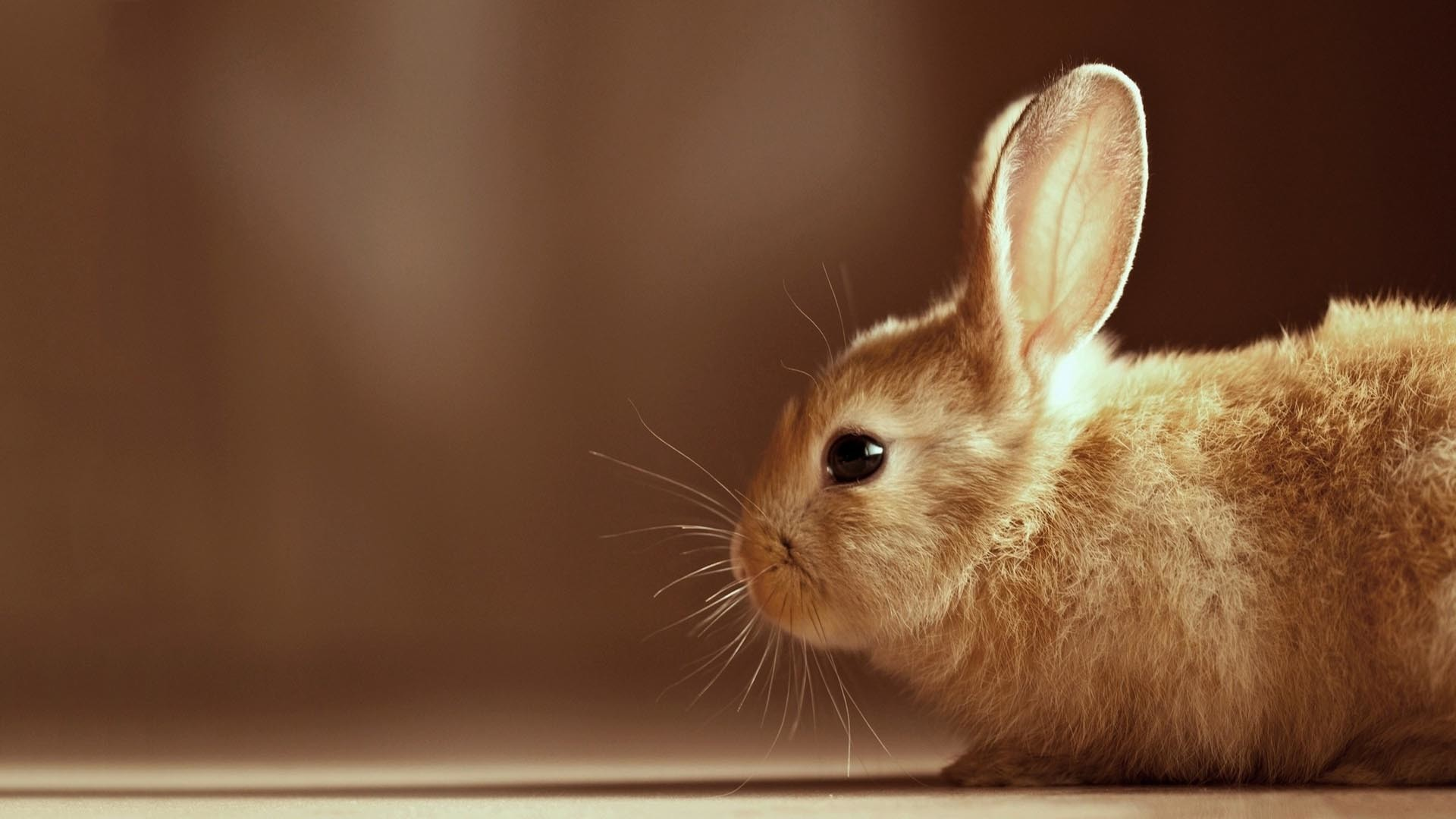 Cute Baby Bunny Widescreen Wallpaper HD   Best Quality HD Wallpapers