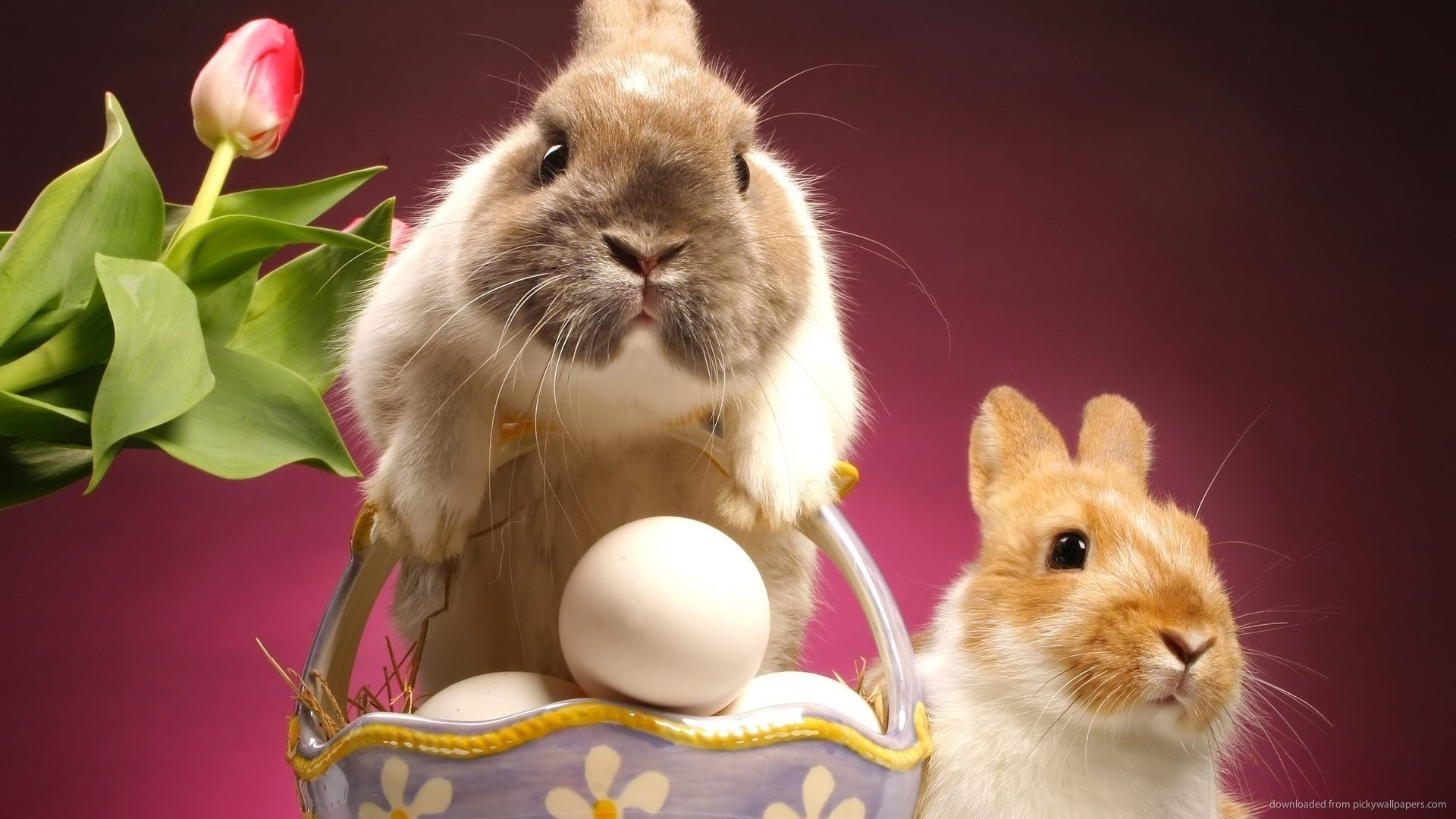 Easter bunnies with eggs and tulip picture