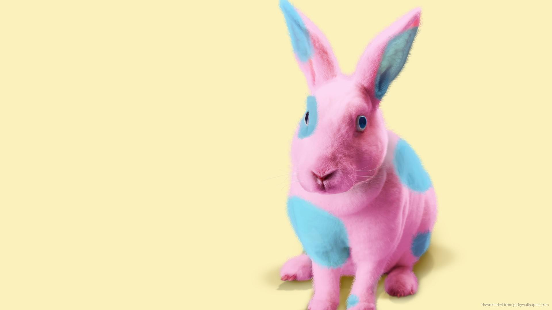 Terms bunnies tumblr with pink wallpaper pink bunny cartoon wallpaper