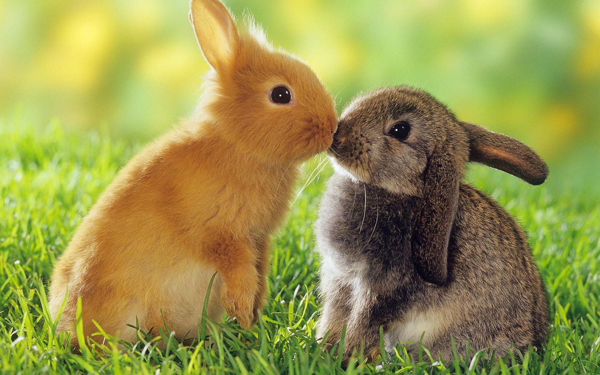 4K Rabbits wallpapers
