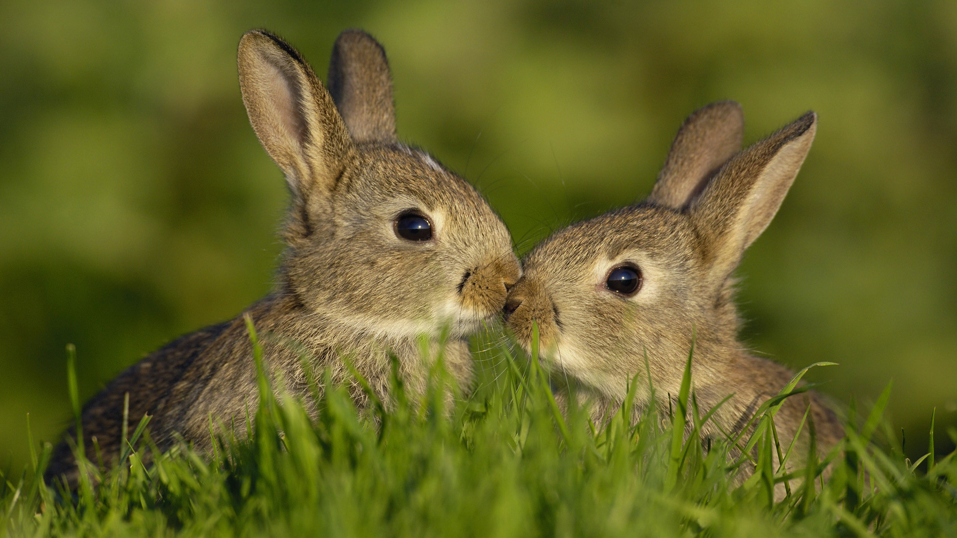 Rabbits Nose to Nose