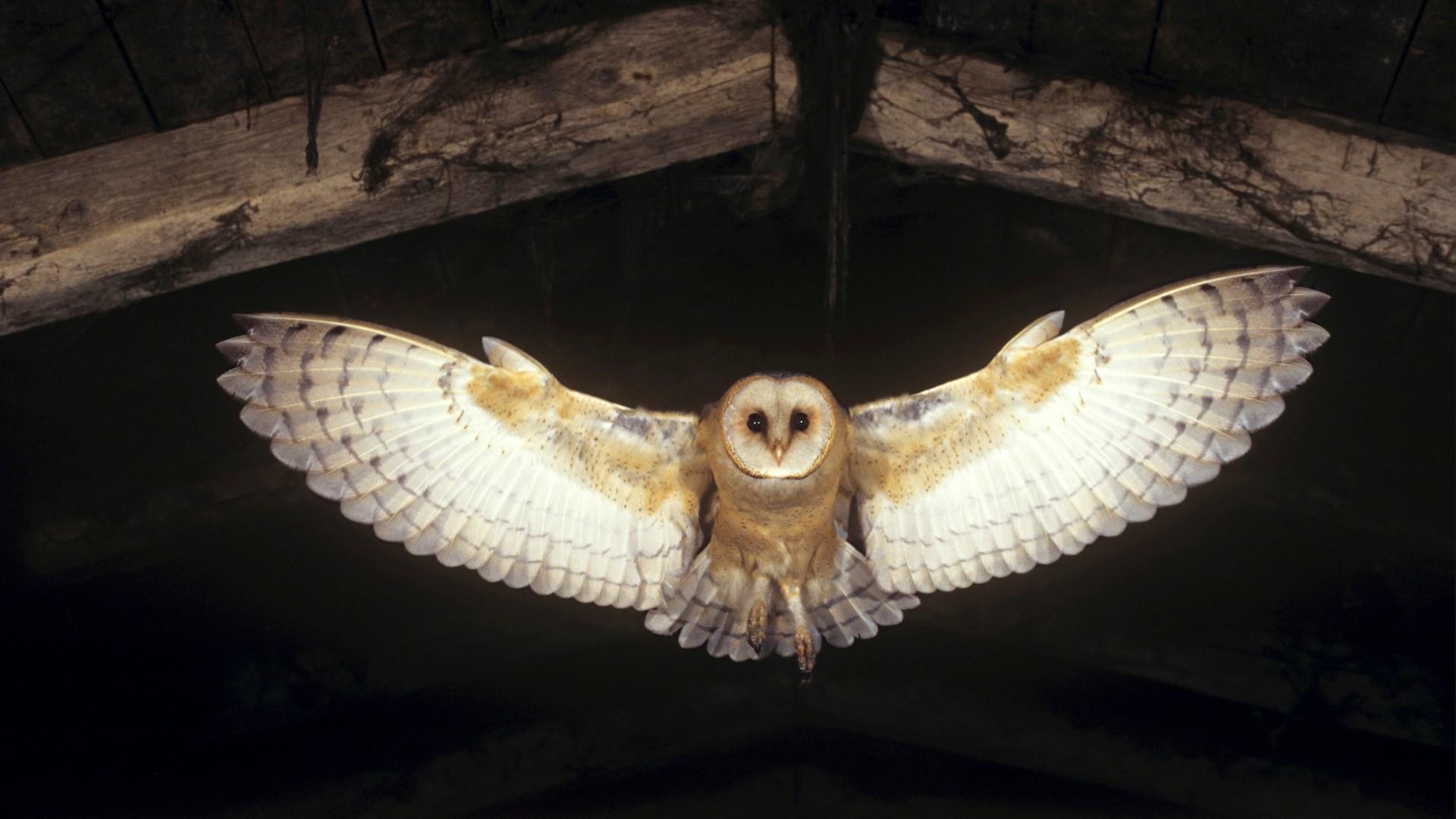 Barn Owl Wallpaper For Iphone