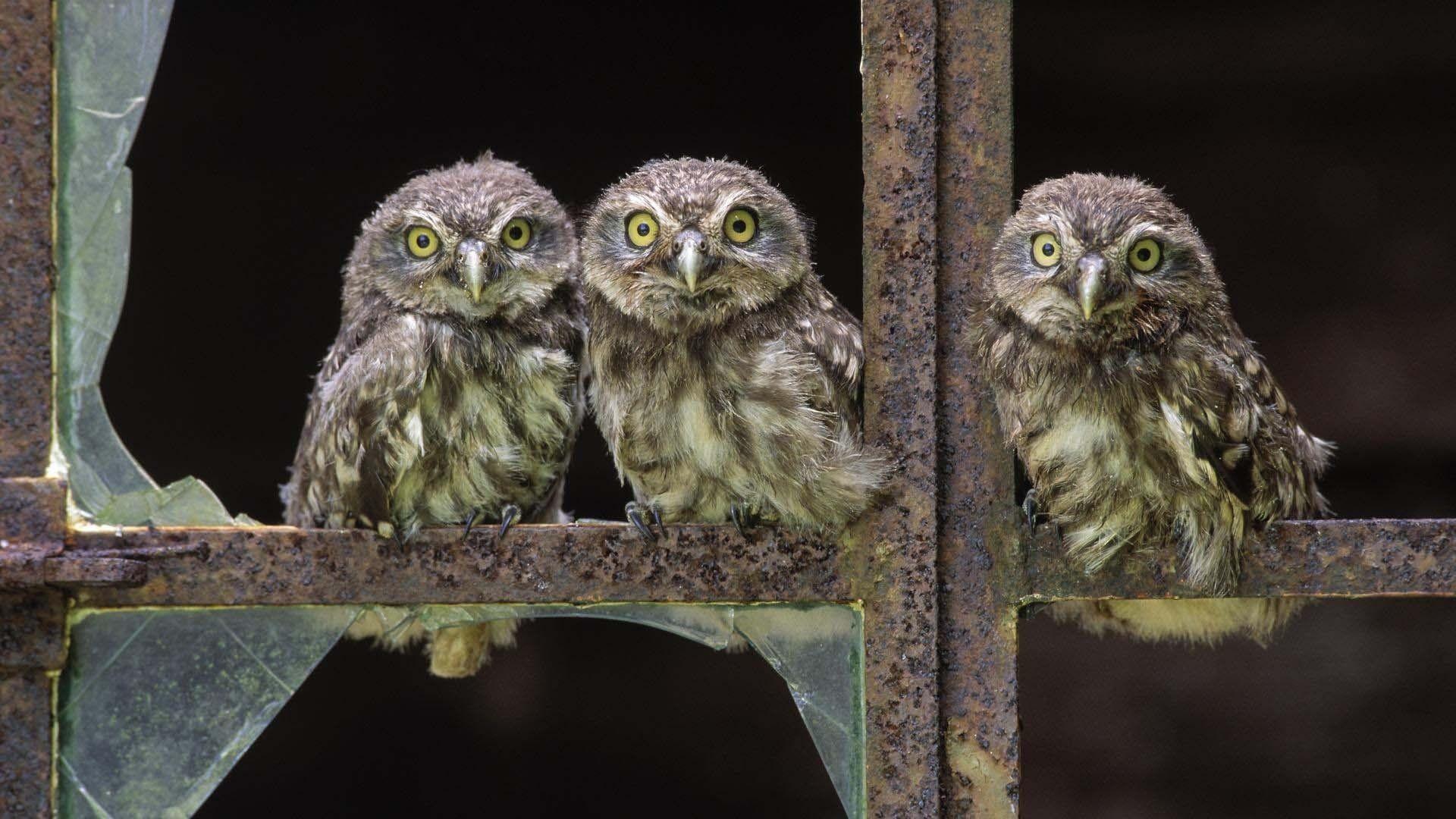 Cute Owls Wallpaper HD Download Of Cute Birds Wallpaper