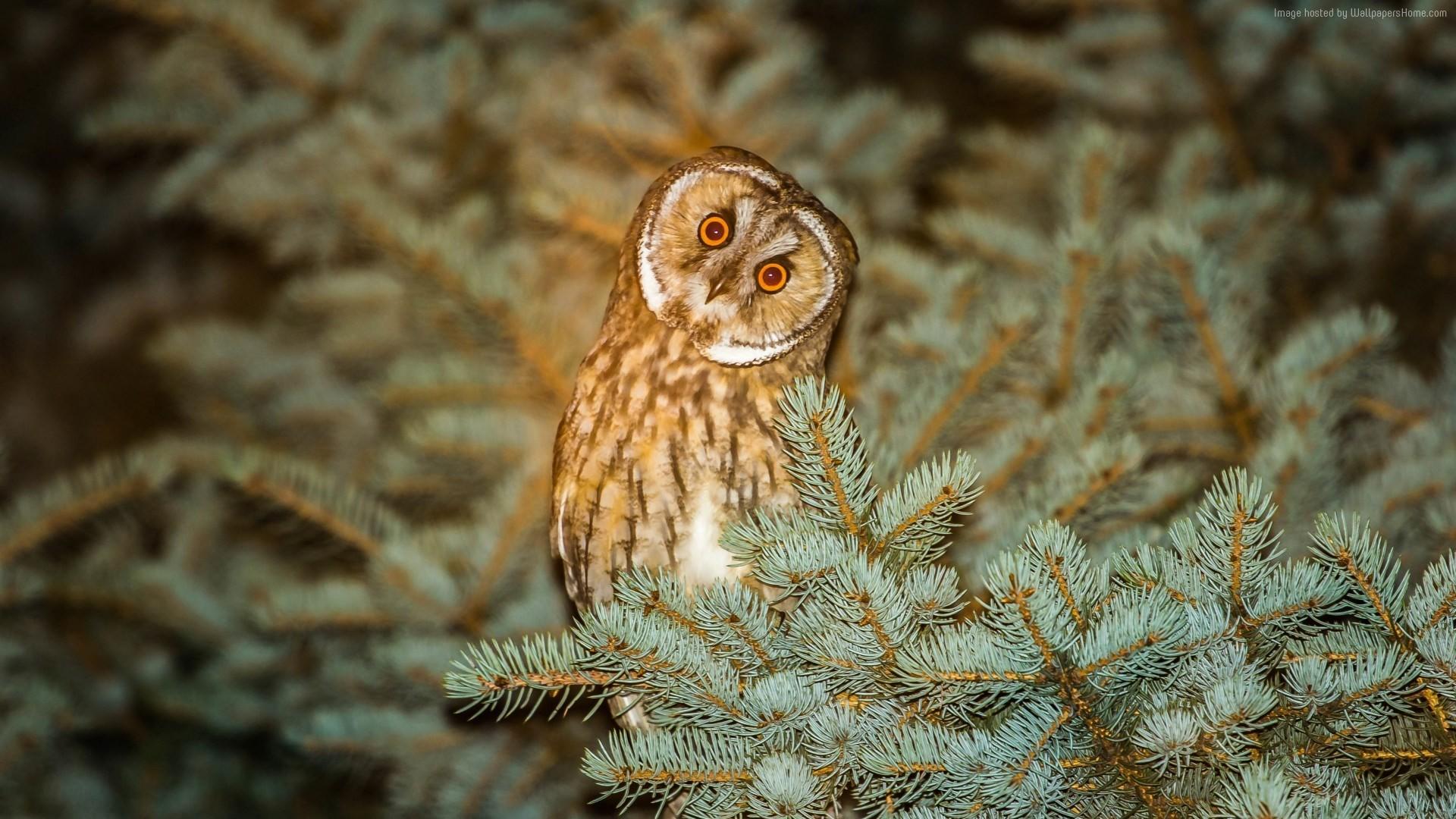 snowy owl wallpaper – Full HD Wallpapers, Photos (Zayden Gill 1920×1331)    ololoshenka   Pinterest   Snowy owl and Owl