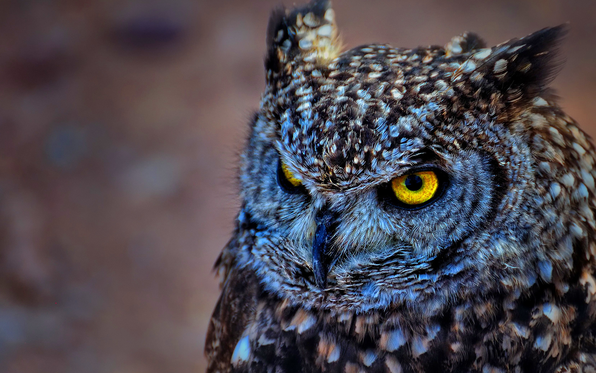 EAGLE OWL WALLPAPERS FREE Wallpapers & Background images .