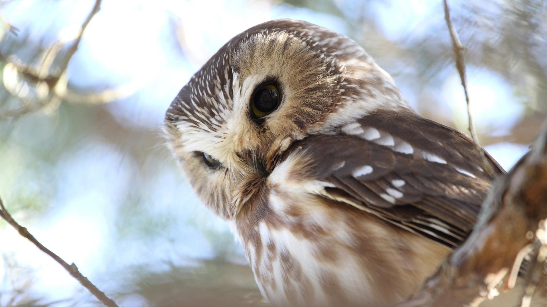 owl wallpaper x umadcom with owl wallpaper.