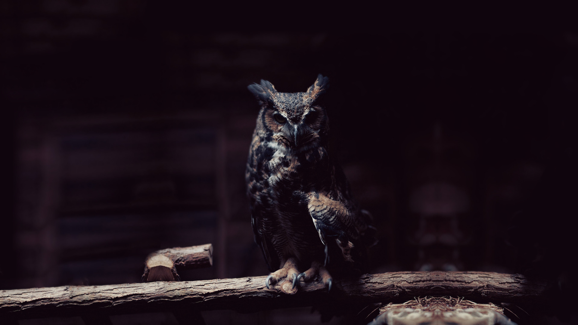 Amazing Black Owl Wallpapers