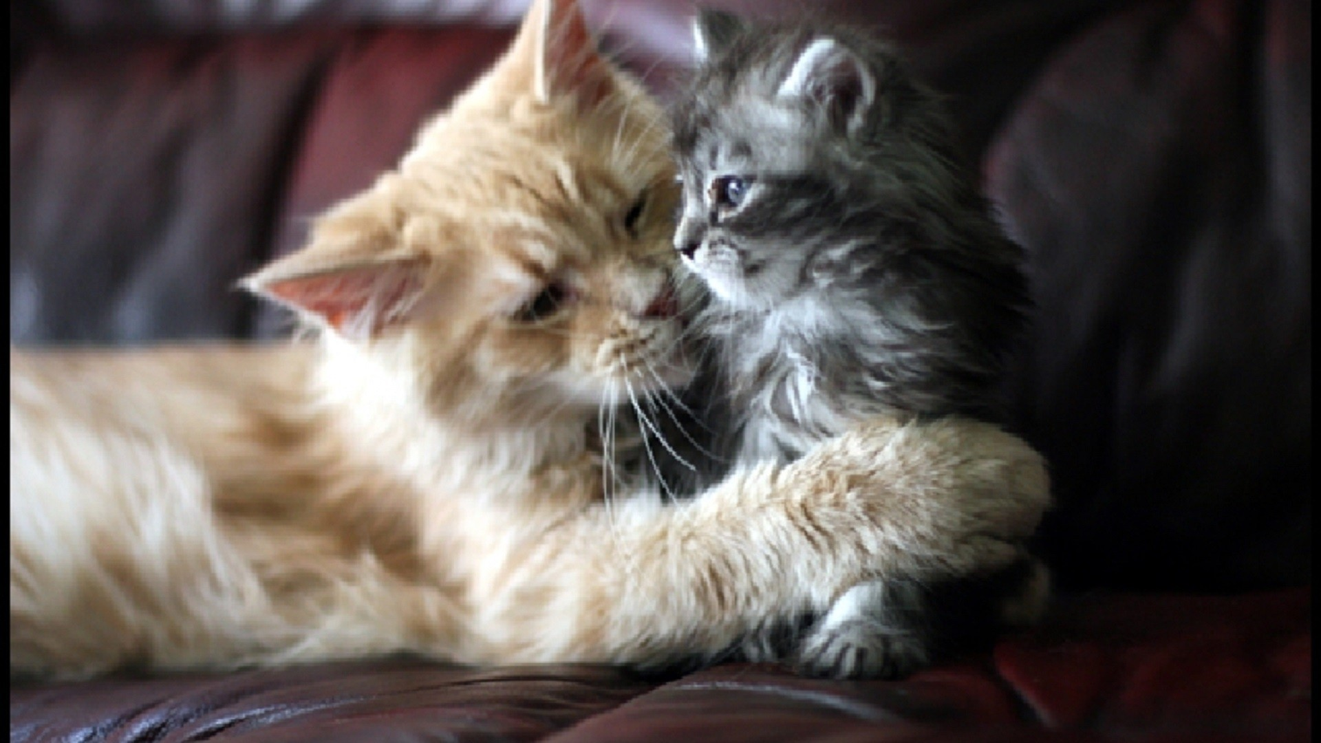 Beautiful-Cat-and-kitten-cats-free-hd-wallpapers-