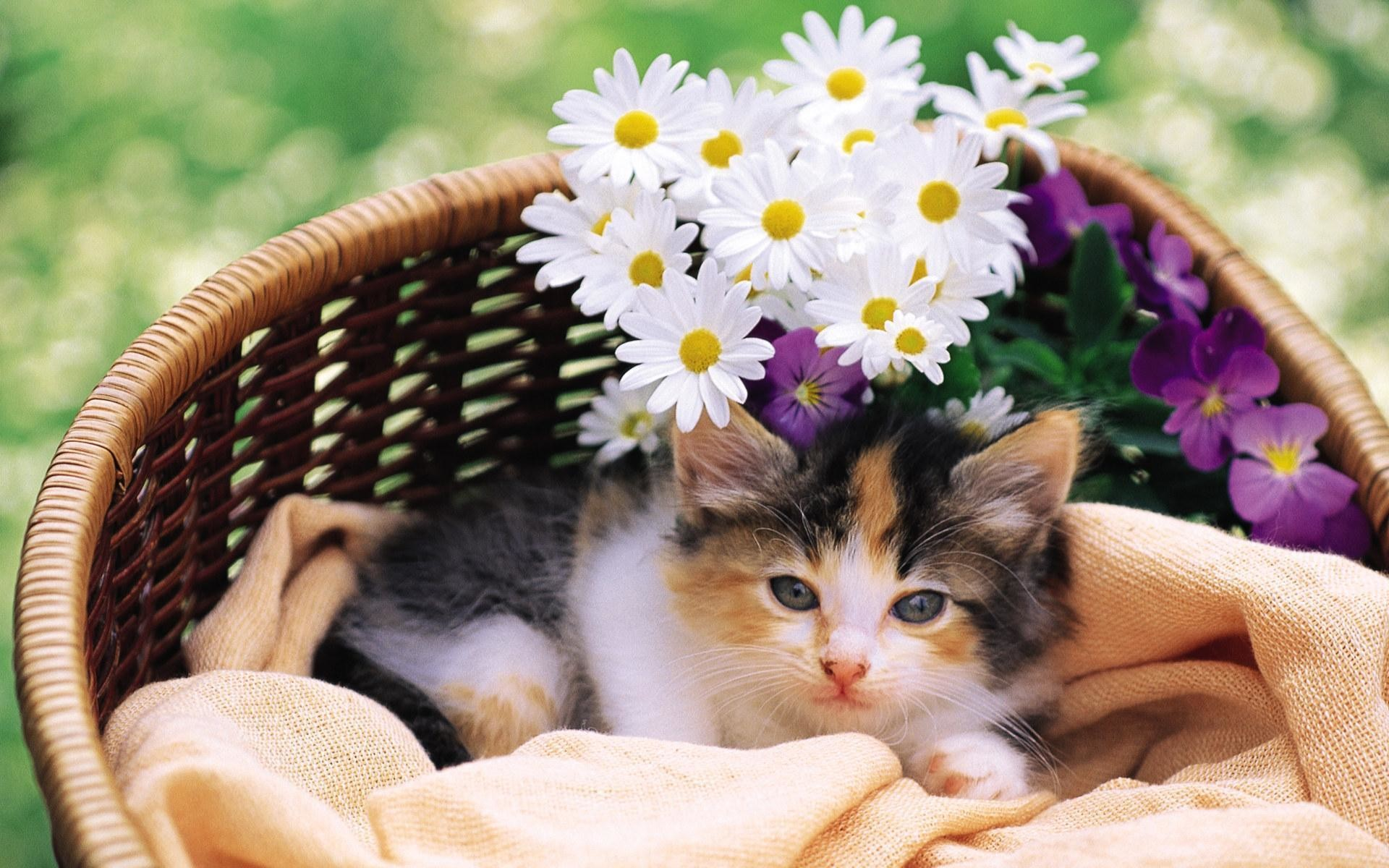 Find this Pin and more on Cats and Kittens by autumnsunshinec.