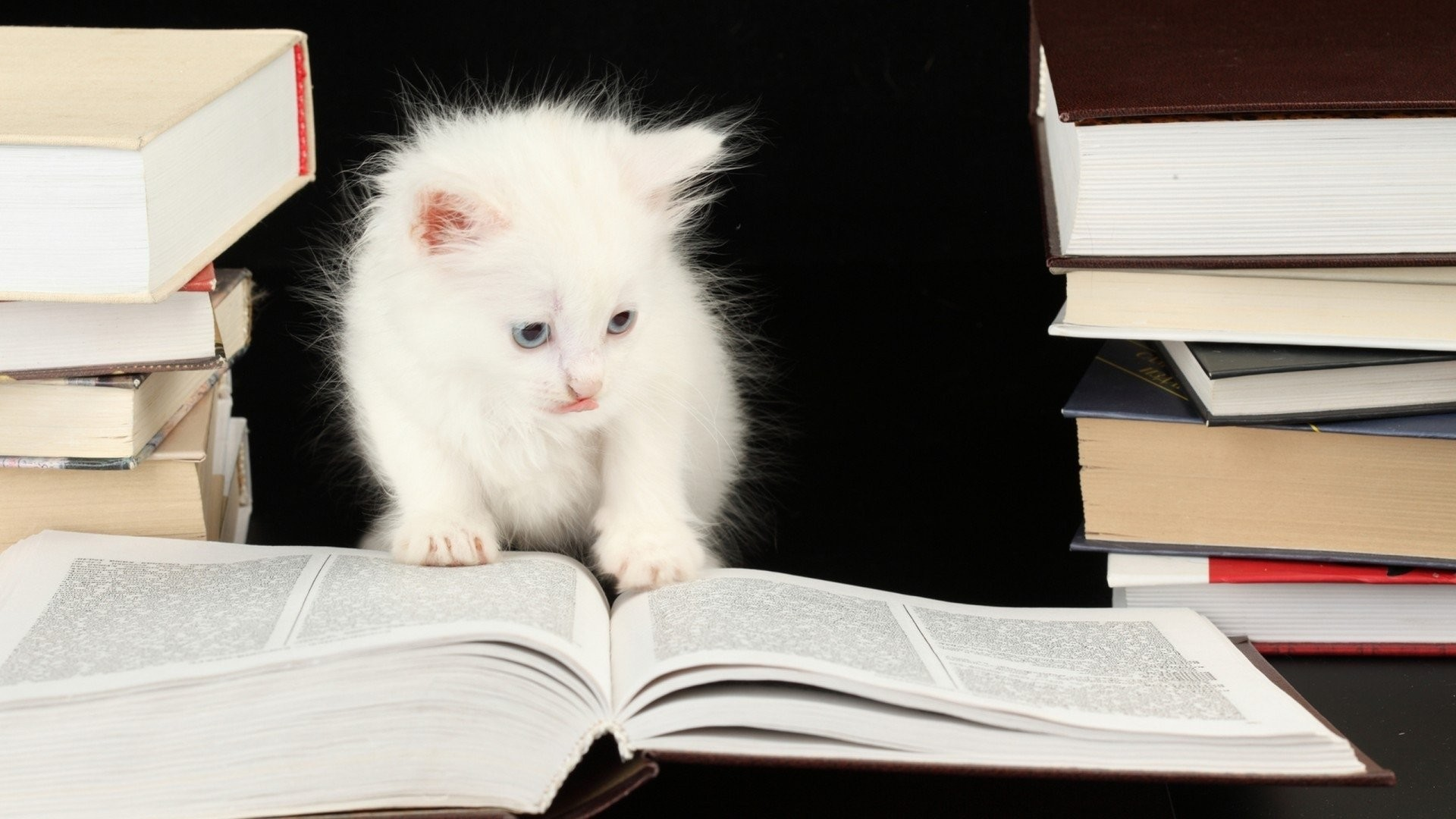 Best images about Kitten wallpaper on Pinterest Cats Sweet