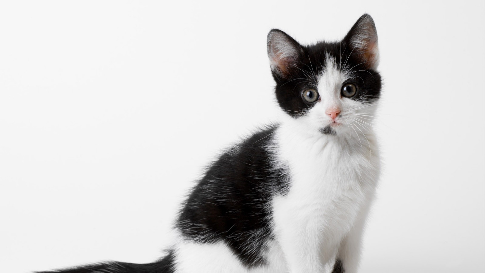Cats And Kittens Black And White
