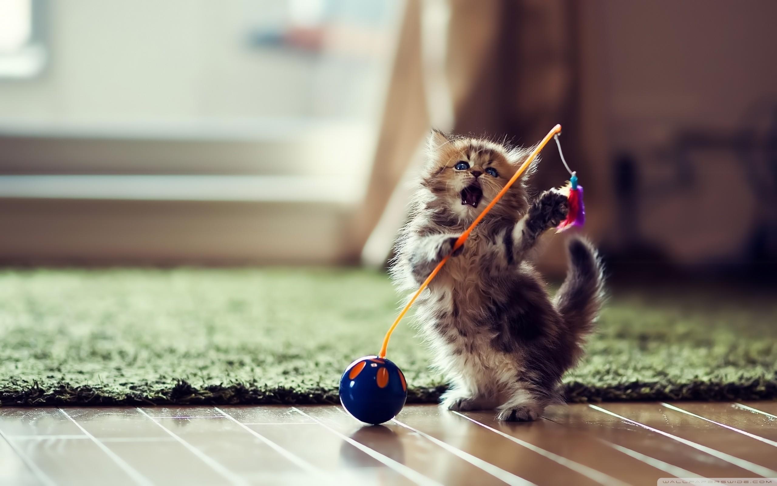 … kittens wallpapers photos and desktop backgrounds for mobile up; dancer  cat hd desktop wallpaper high definition fullscreen …
