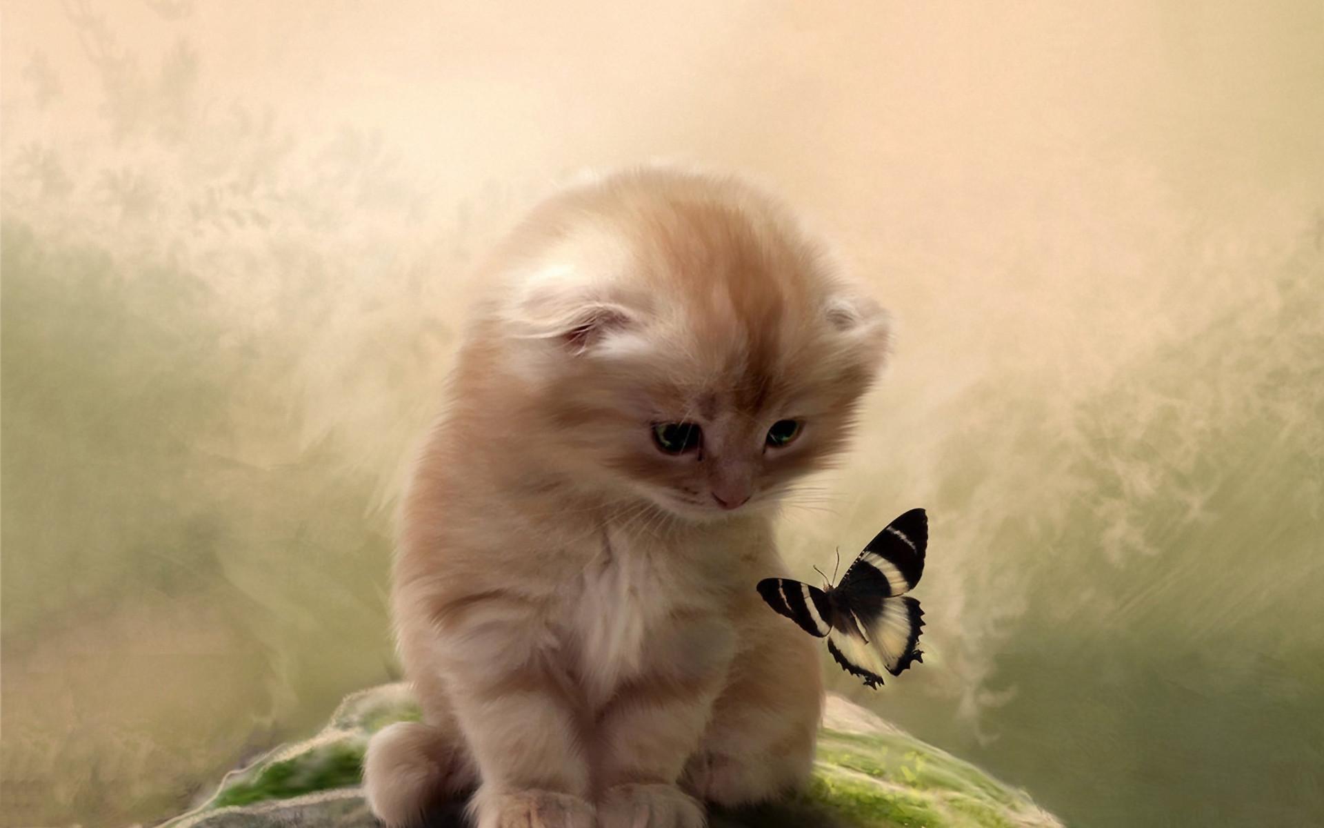 Kitty butterfly Wallpaper in