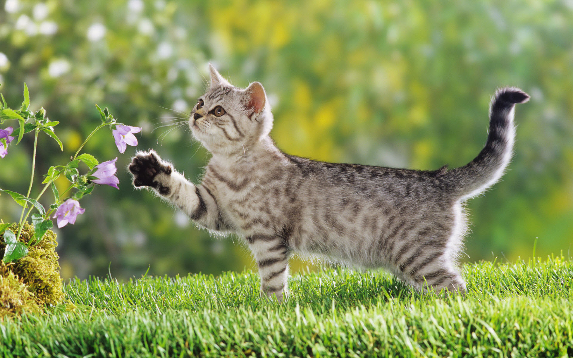 cute wallpaper cat photo #facts – More info about cat at  Catsincare.com