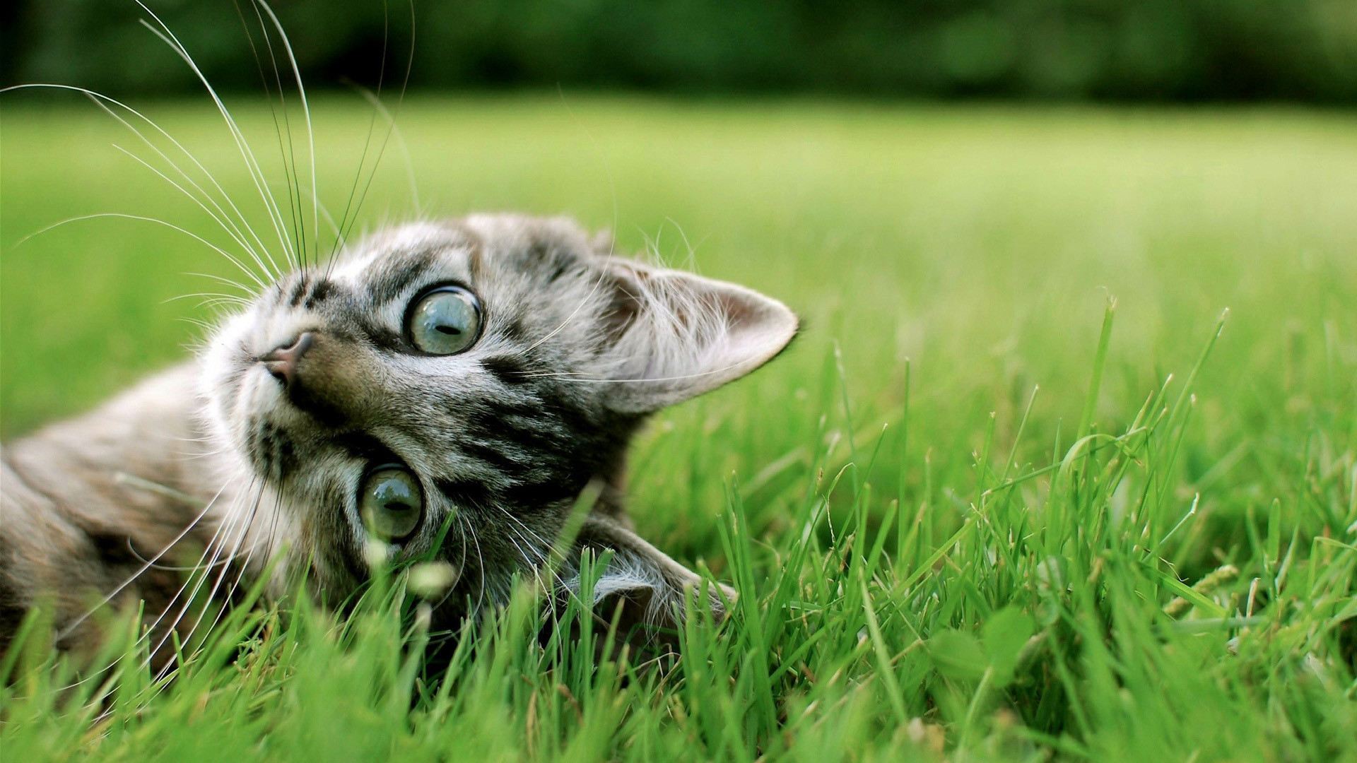 Cute black and white kitten Wallpaper