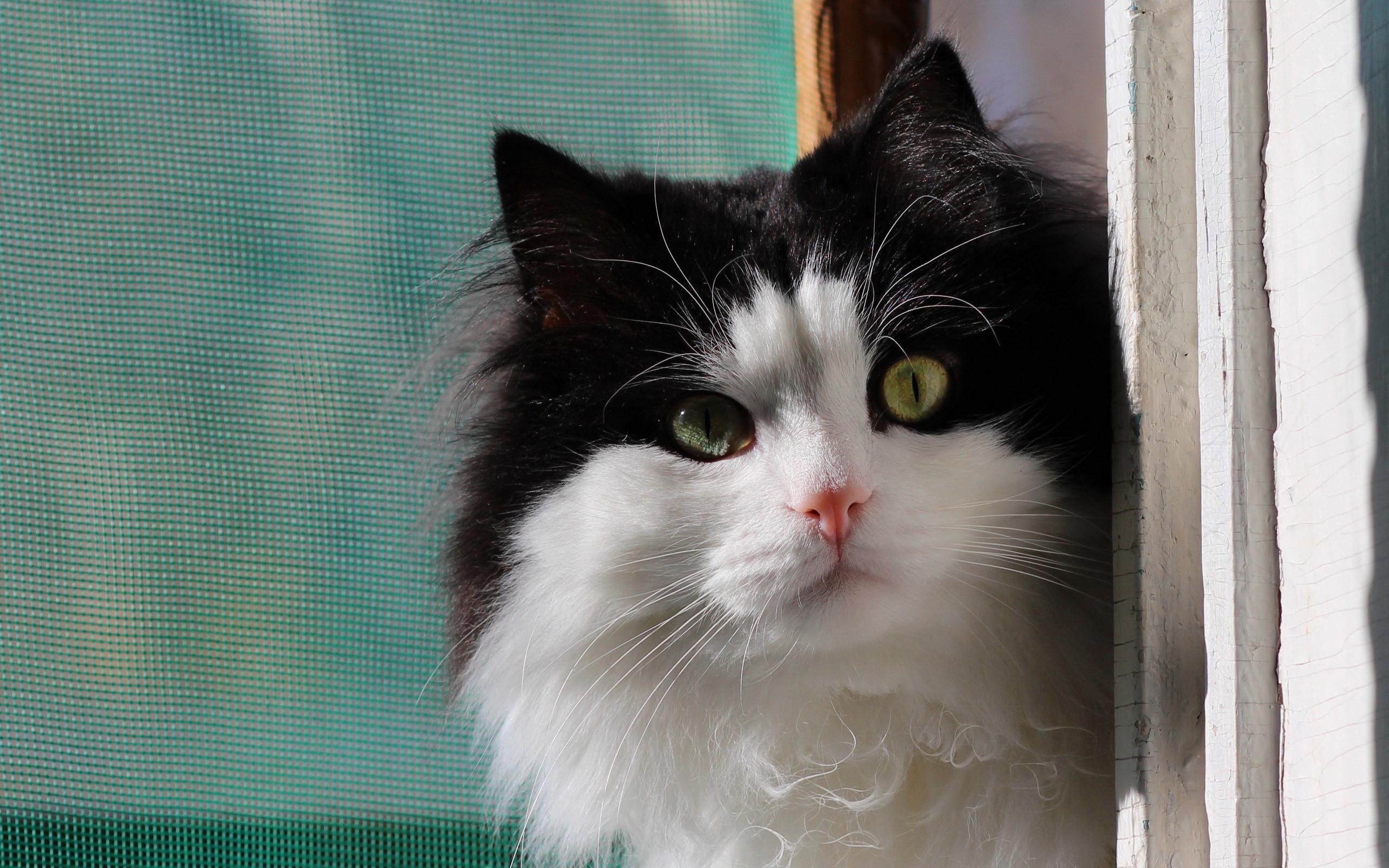 Kittens Wallpaper Black And White