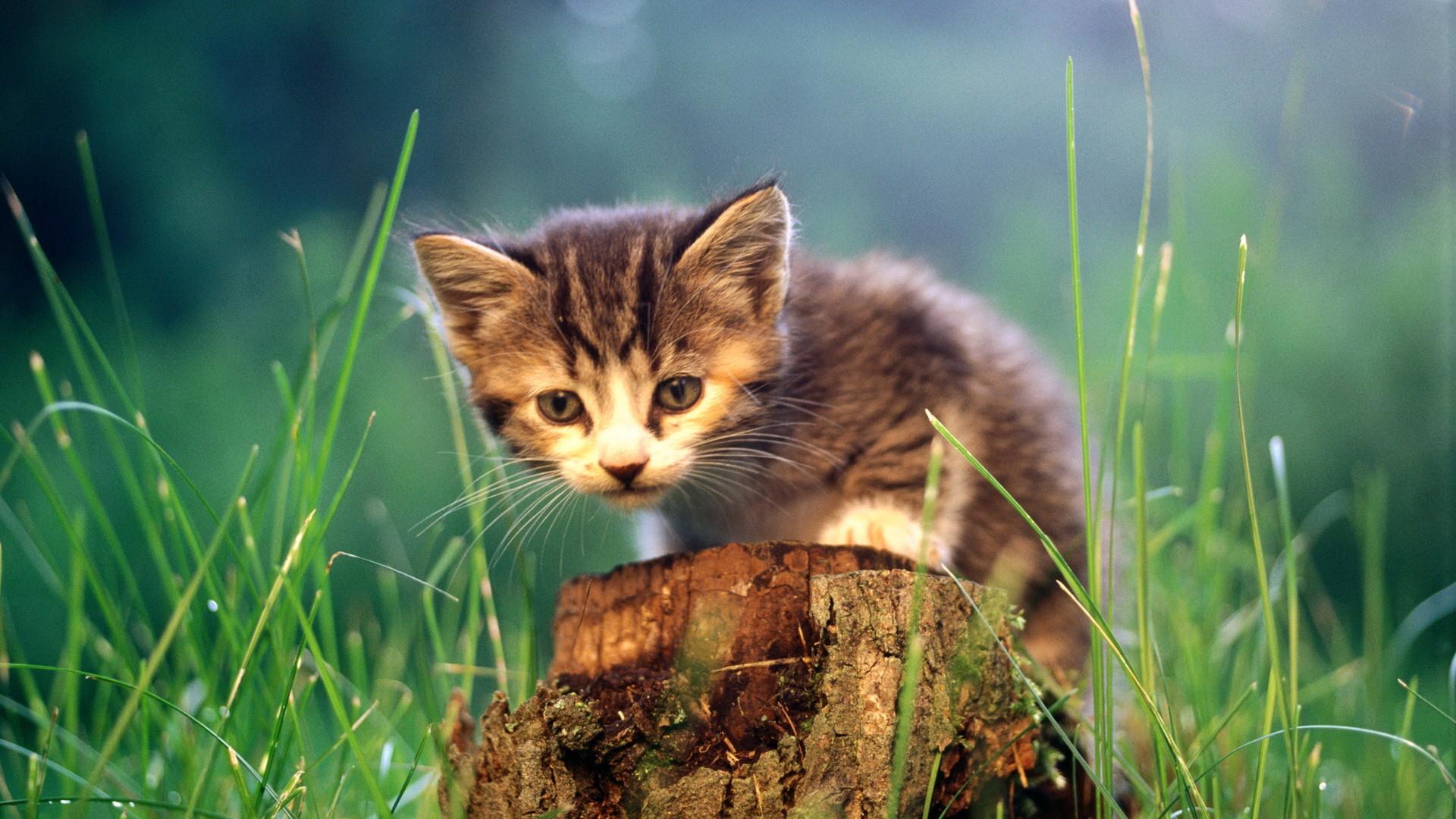 cats animals grass kittens – Wallpaper (#635650) / Wallbase.cc