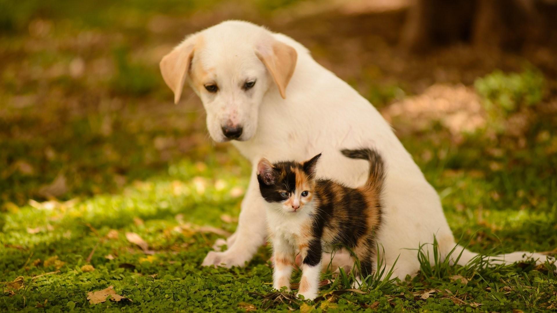 Dog Cat kitten friends baby wallpaper HD.