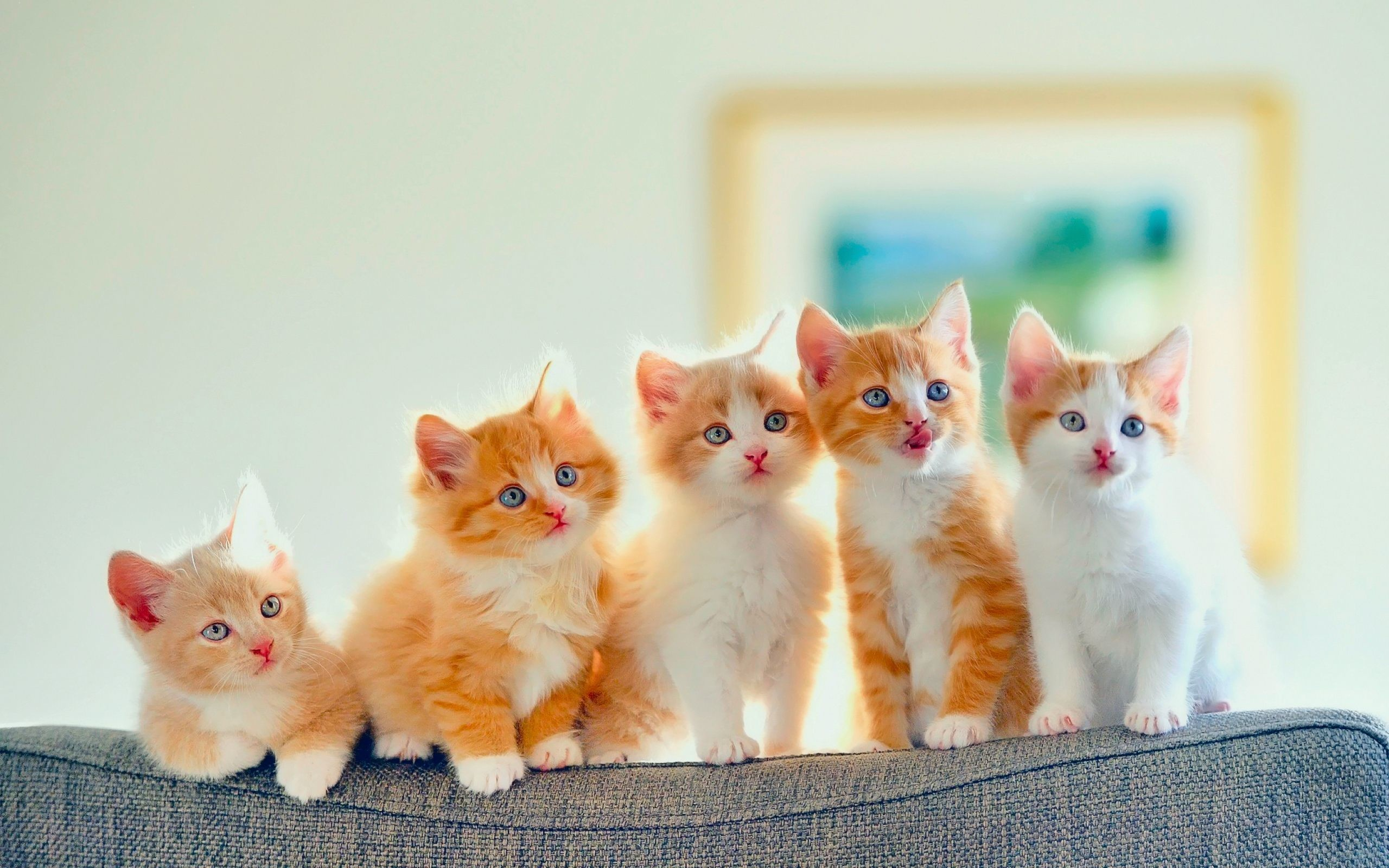 Orange Kitten Wallpaper