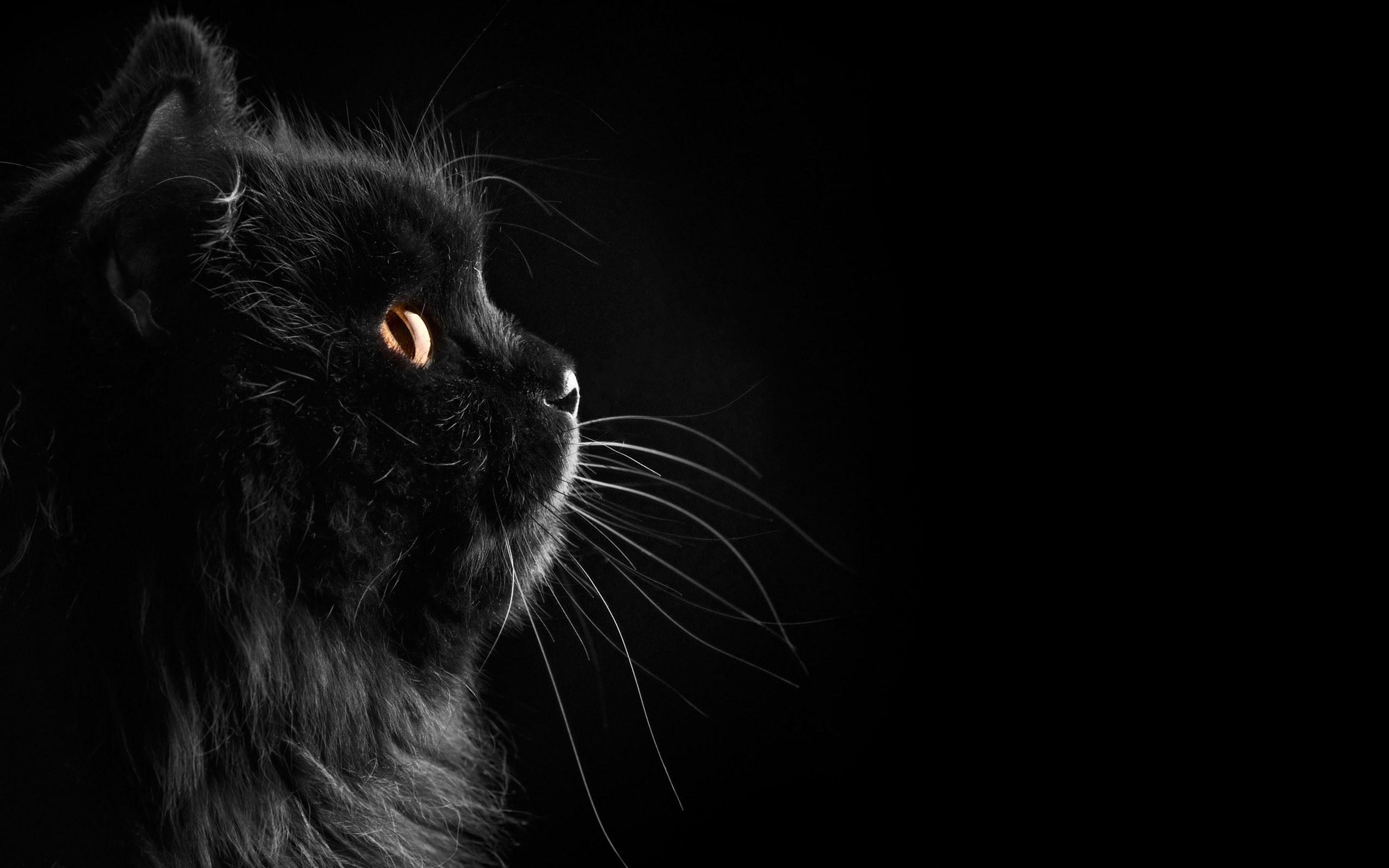 Black Cat Wallpaper 24160 px ~ HDWallSource.com · black cats and  kittens …